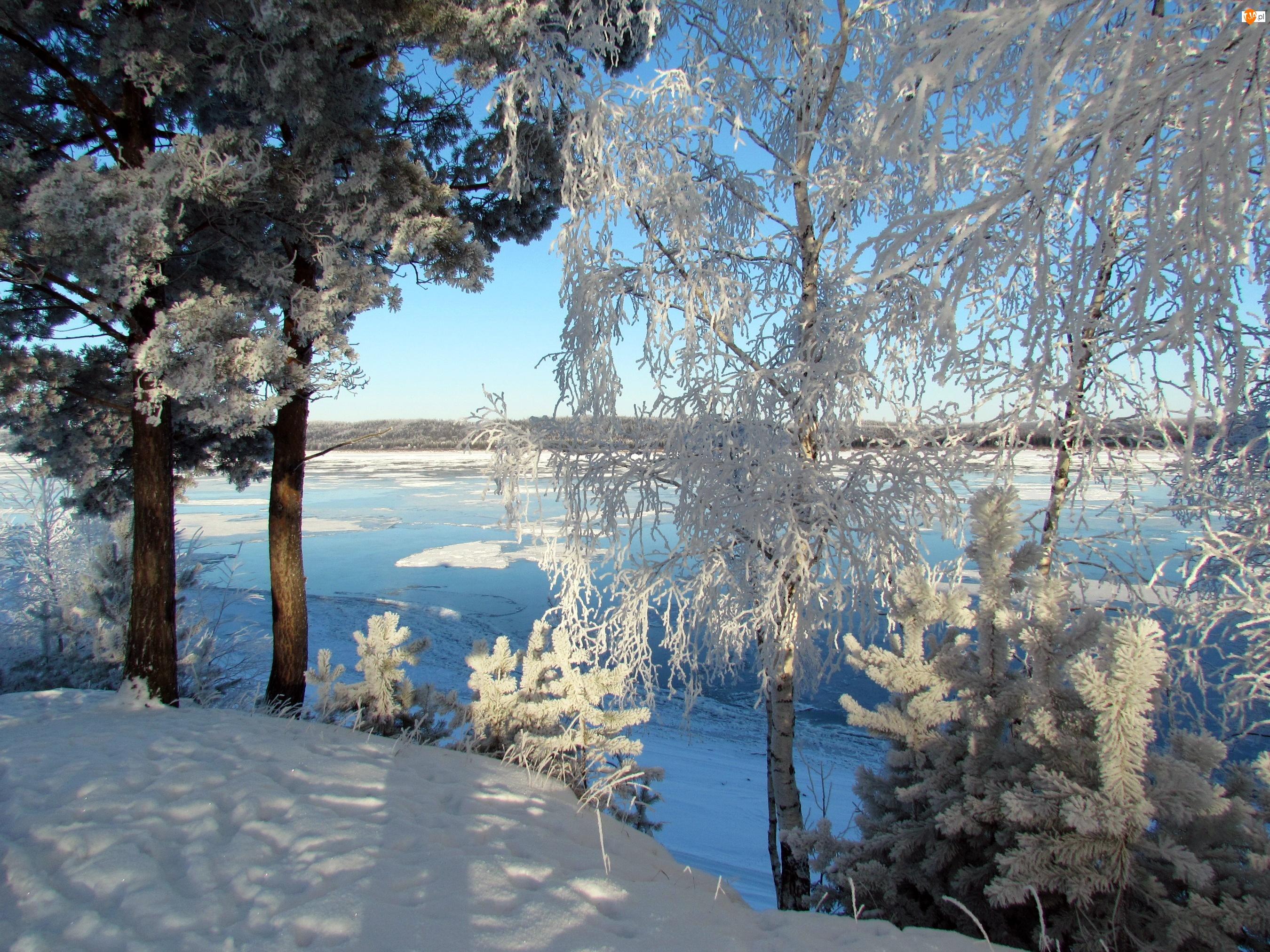 Rosja, Zima, Drzewa, Rzeka, Śnieg