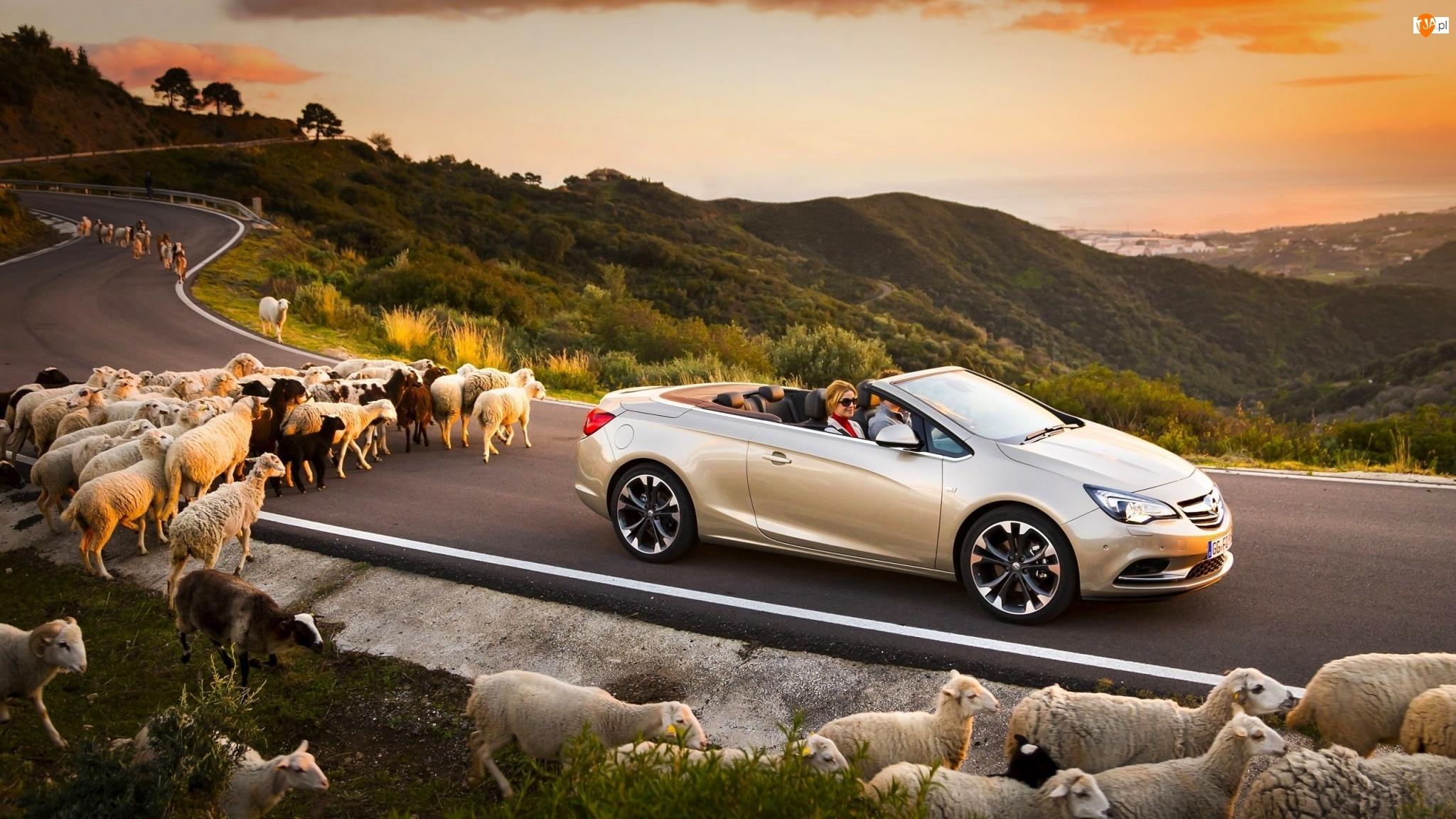Owce, Góry, Opel, Zachód, Samochód, Słońca, Cascada, Droga