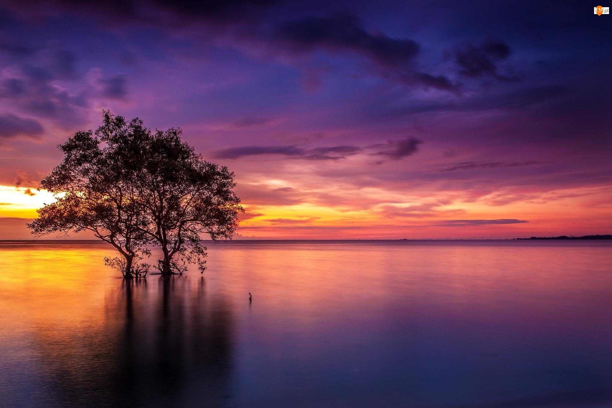 Zachód słońca, Jezioro, Drzewo