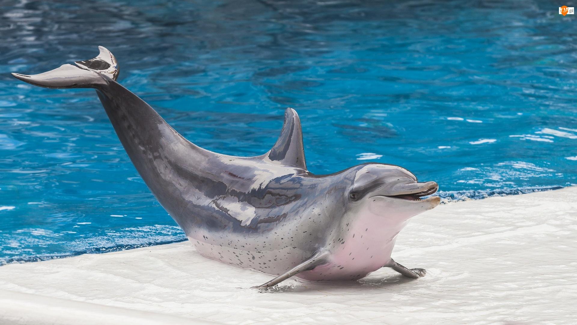 Delfin, Basen