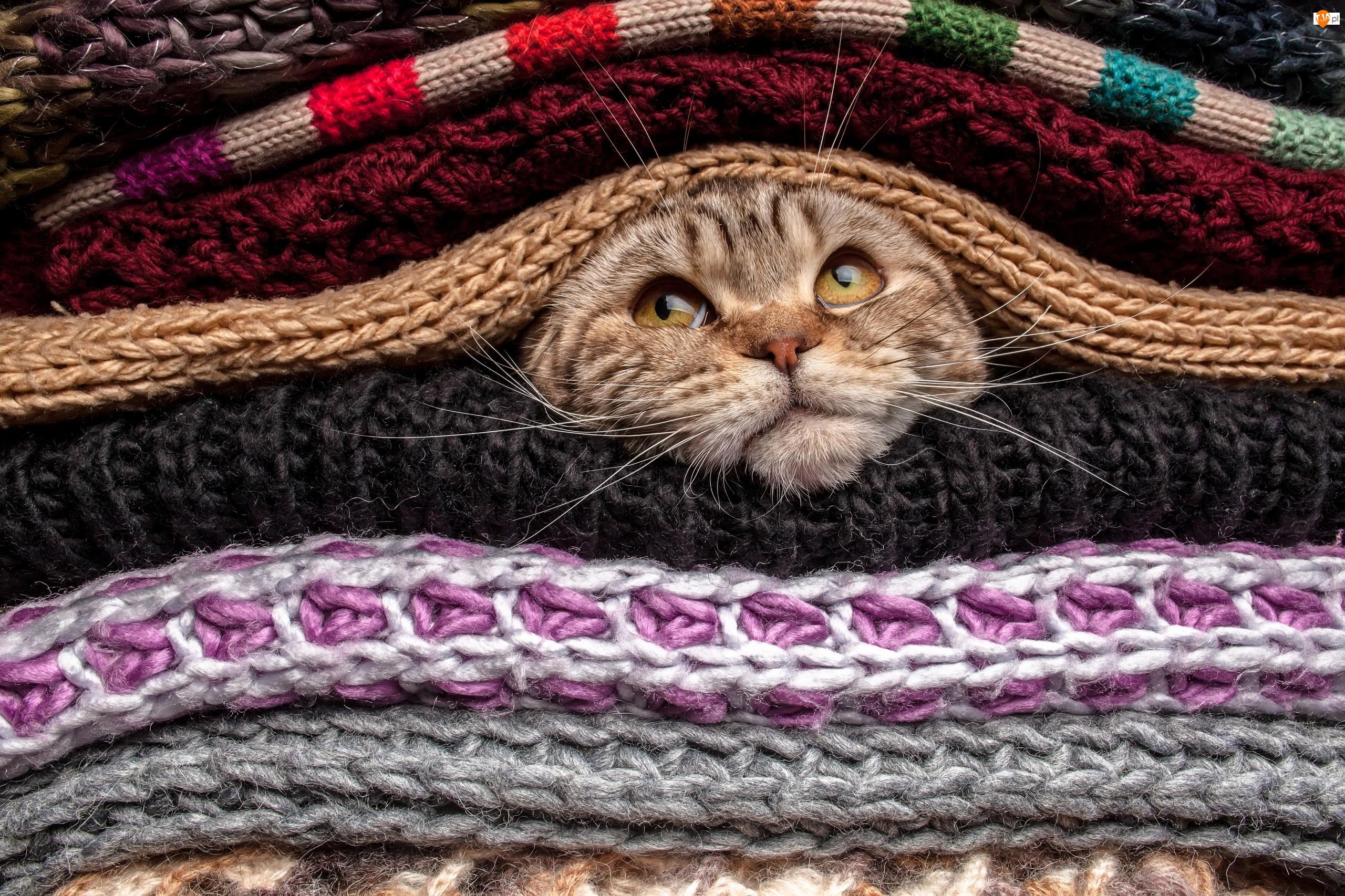 Kot, Szale, Dzianina, Swetry