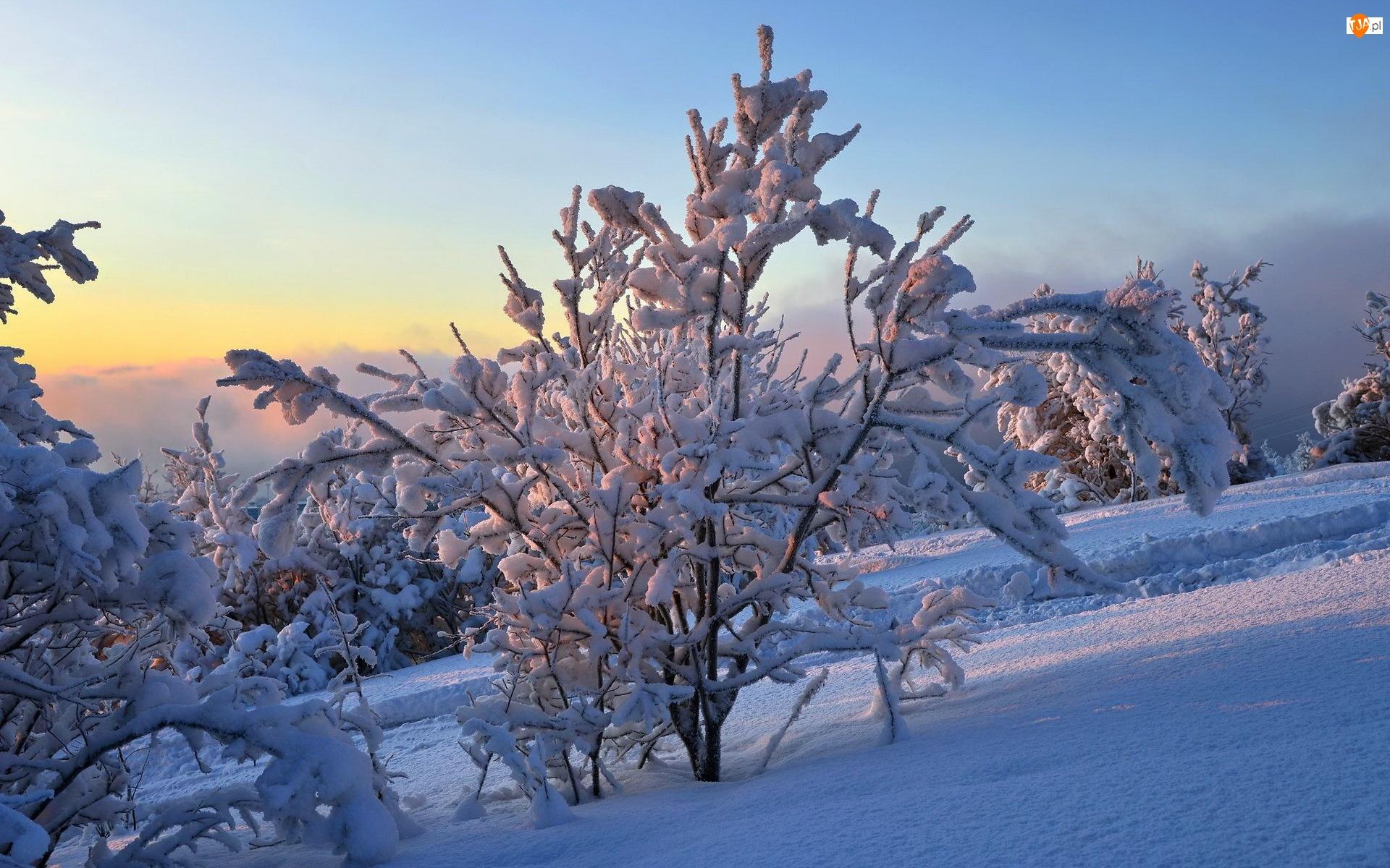 Zima, Góry, Drzewa, Lasy, Światło