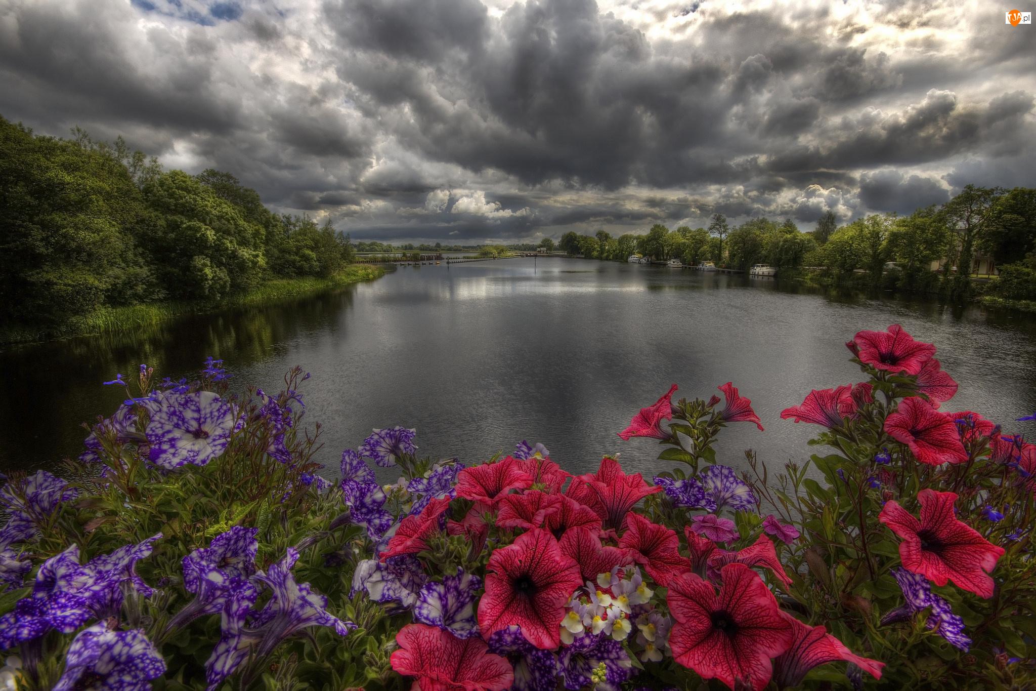 Rzeka, Petunia ogrodowa, Drzewa, Kwiaty