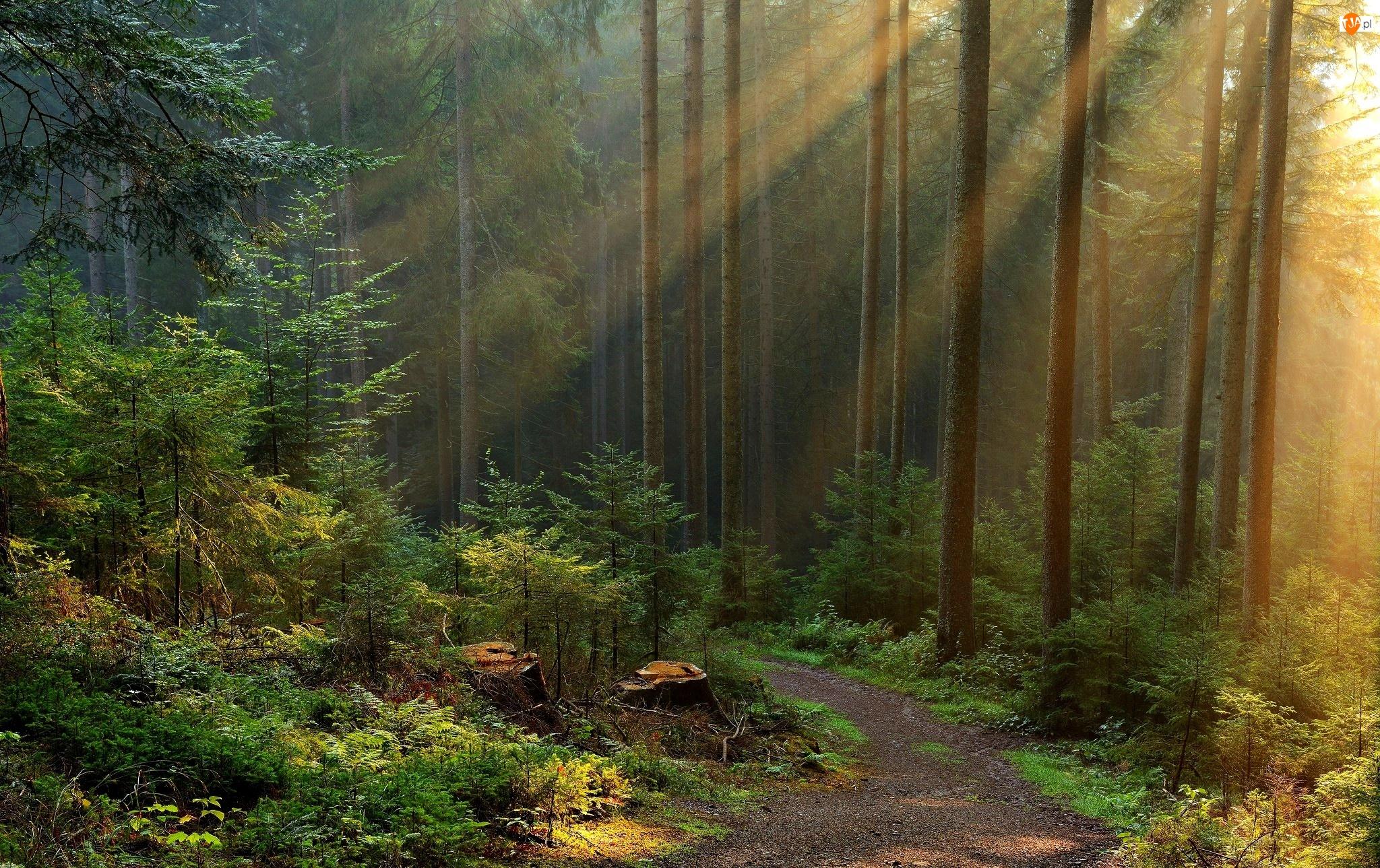Przebijające Światło, Las, Droga