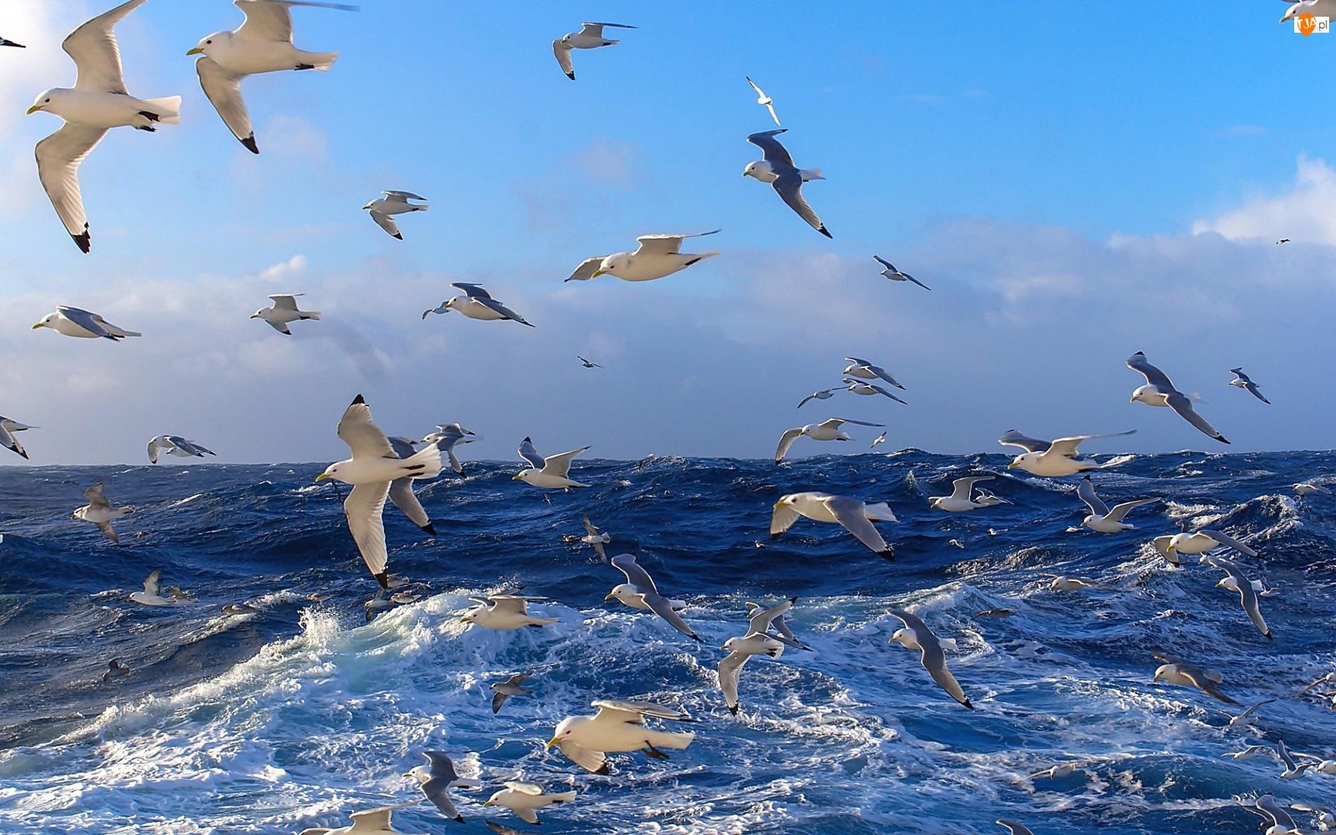 Mewy, Wzburzone, Morze
