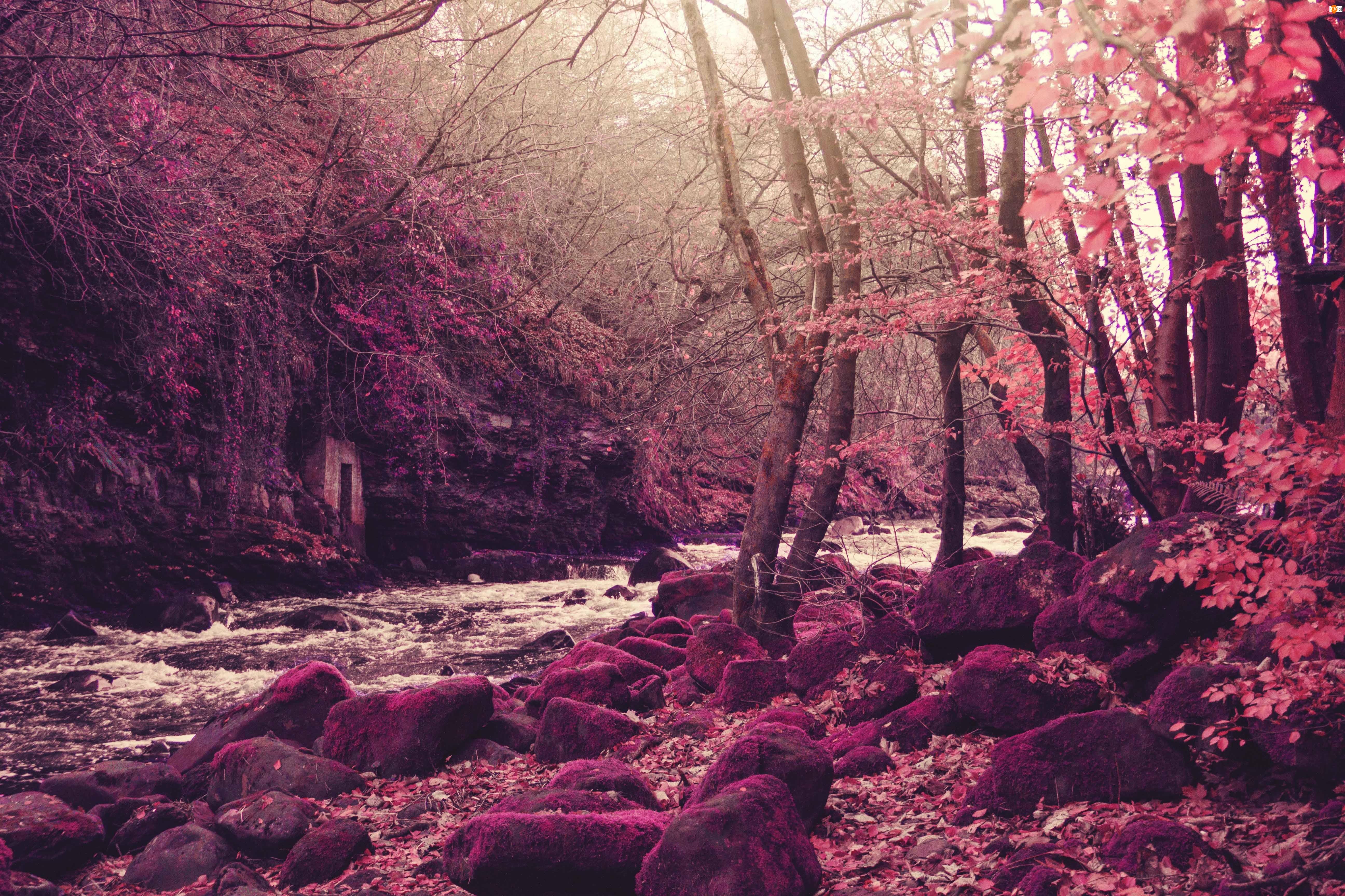 Drzewa, Fioletowe, Grota, Tło, Rzeka