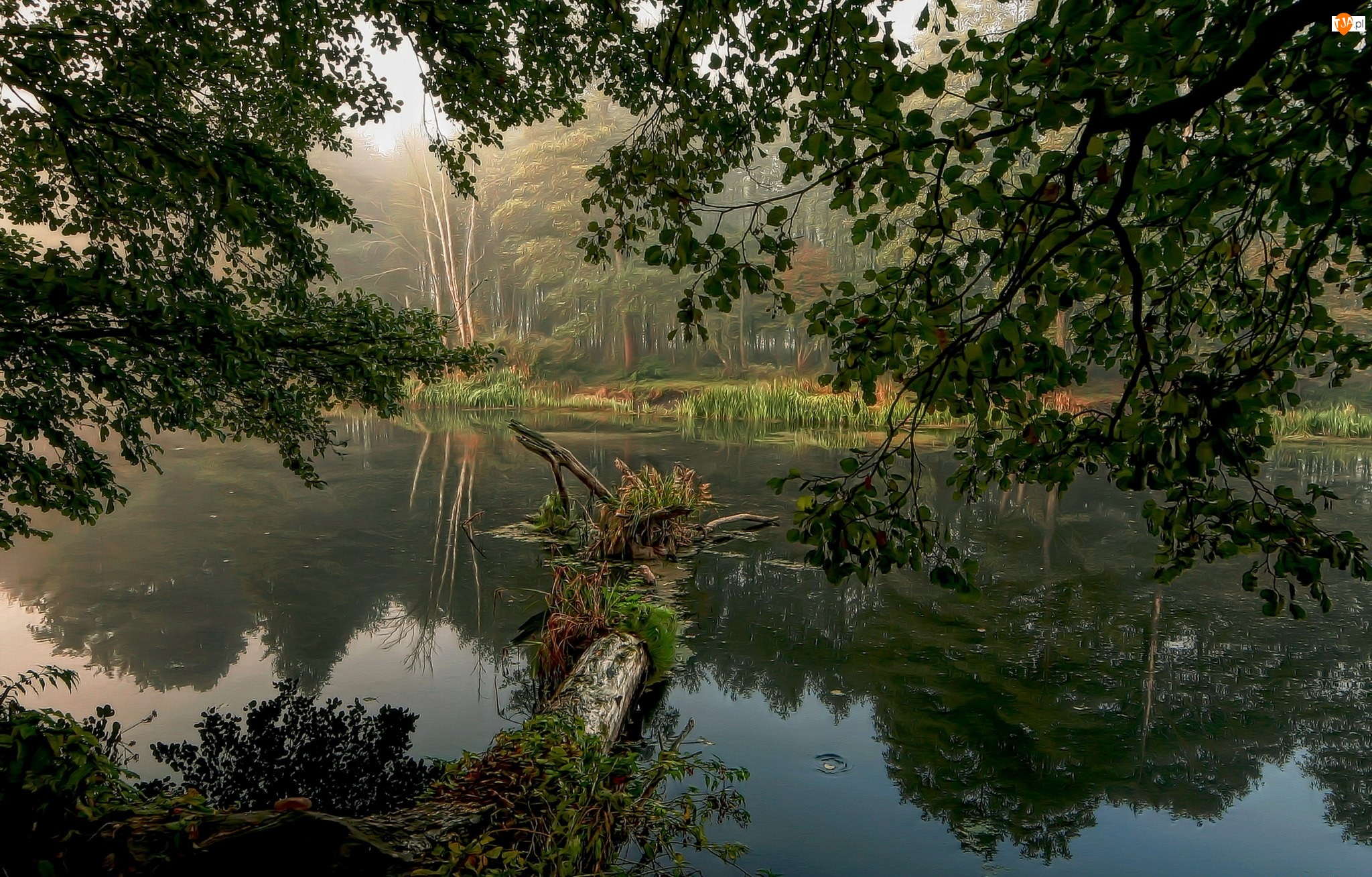 Rzeka, Drzewa
