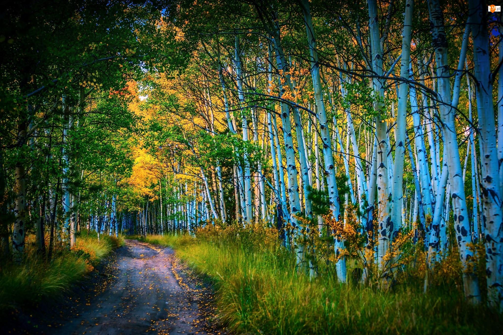 Brzozowy, Jesień, Las, Droga