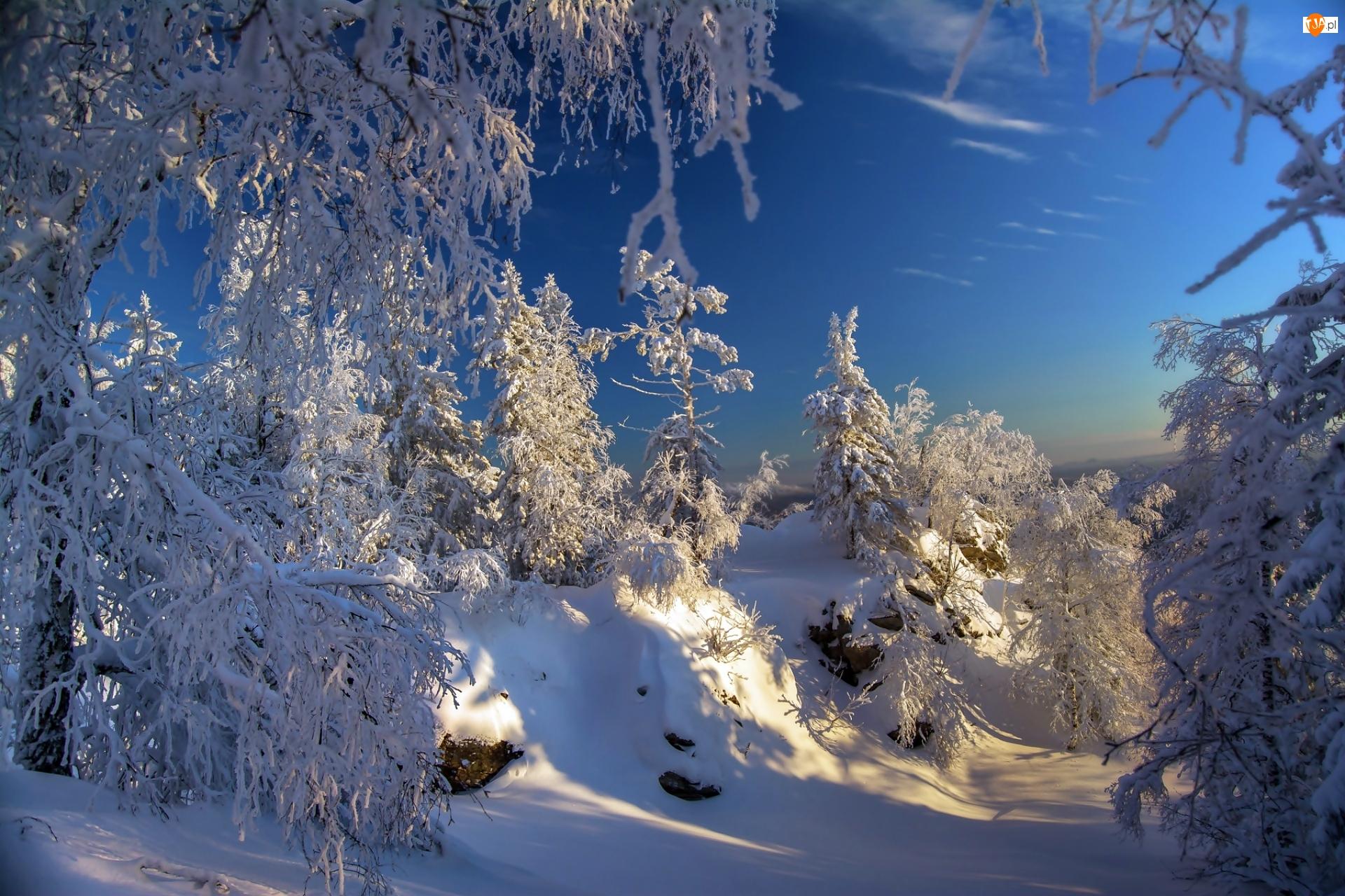Las, Drzewa, Park Narodowy Taganaj, Rosja, Zima