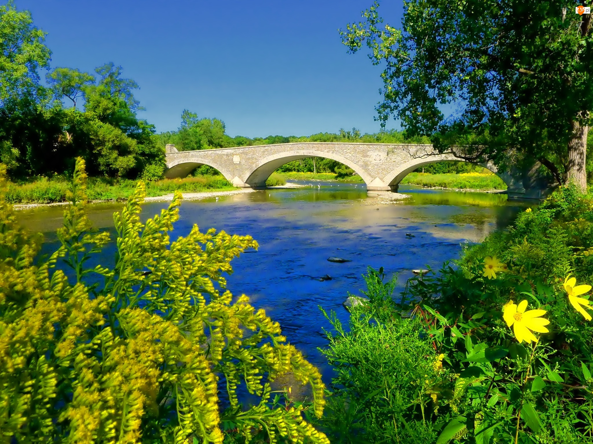 Most, Kwiaty, Rzeka, Drzewa