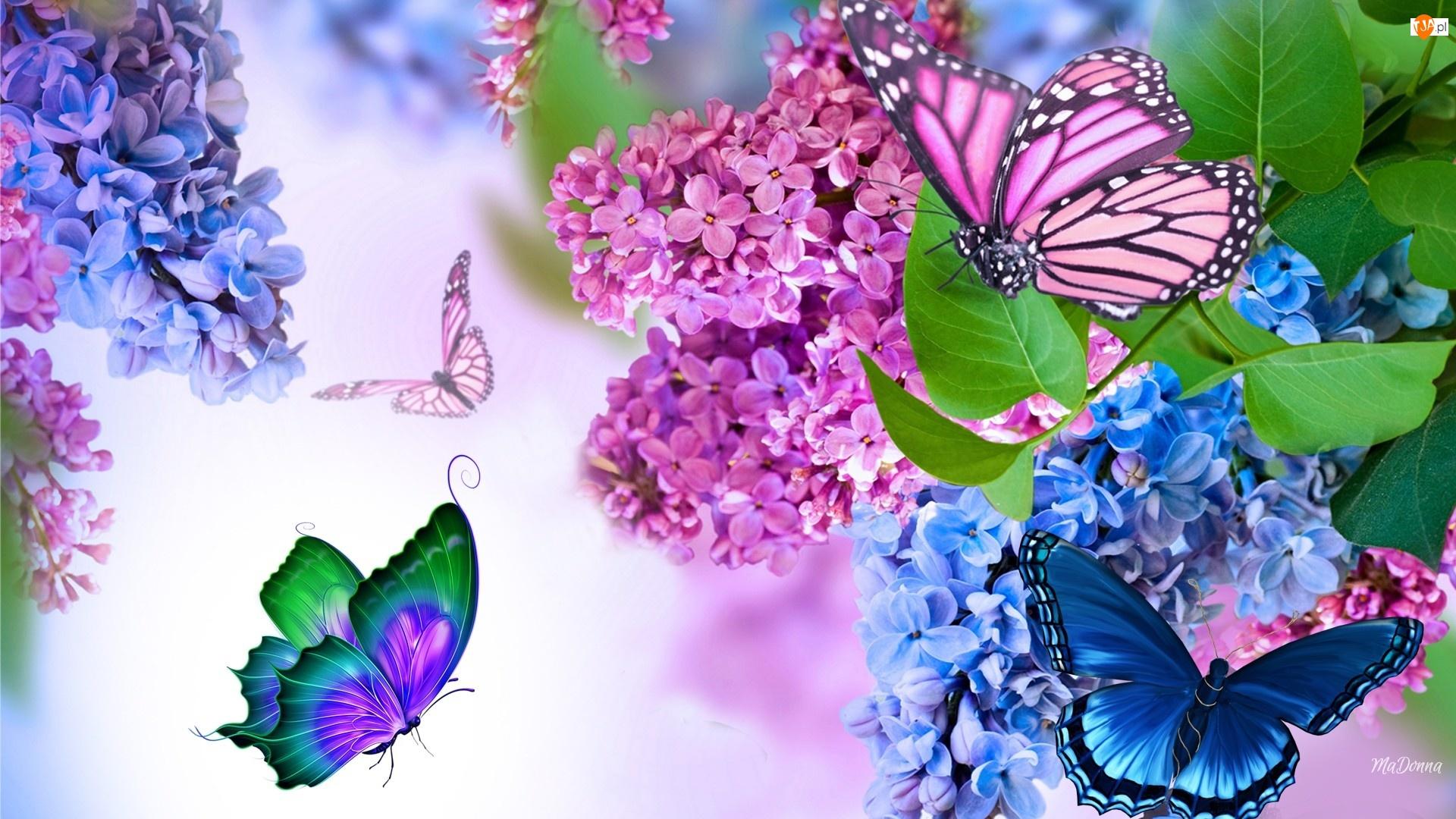 Wiosna, Bez, Motyle