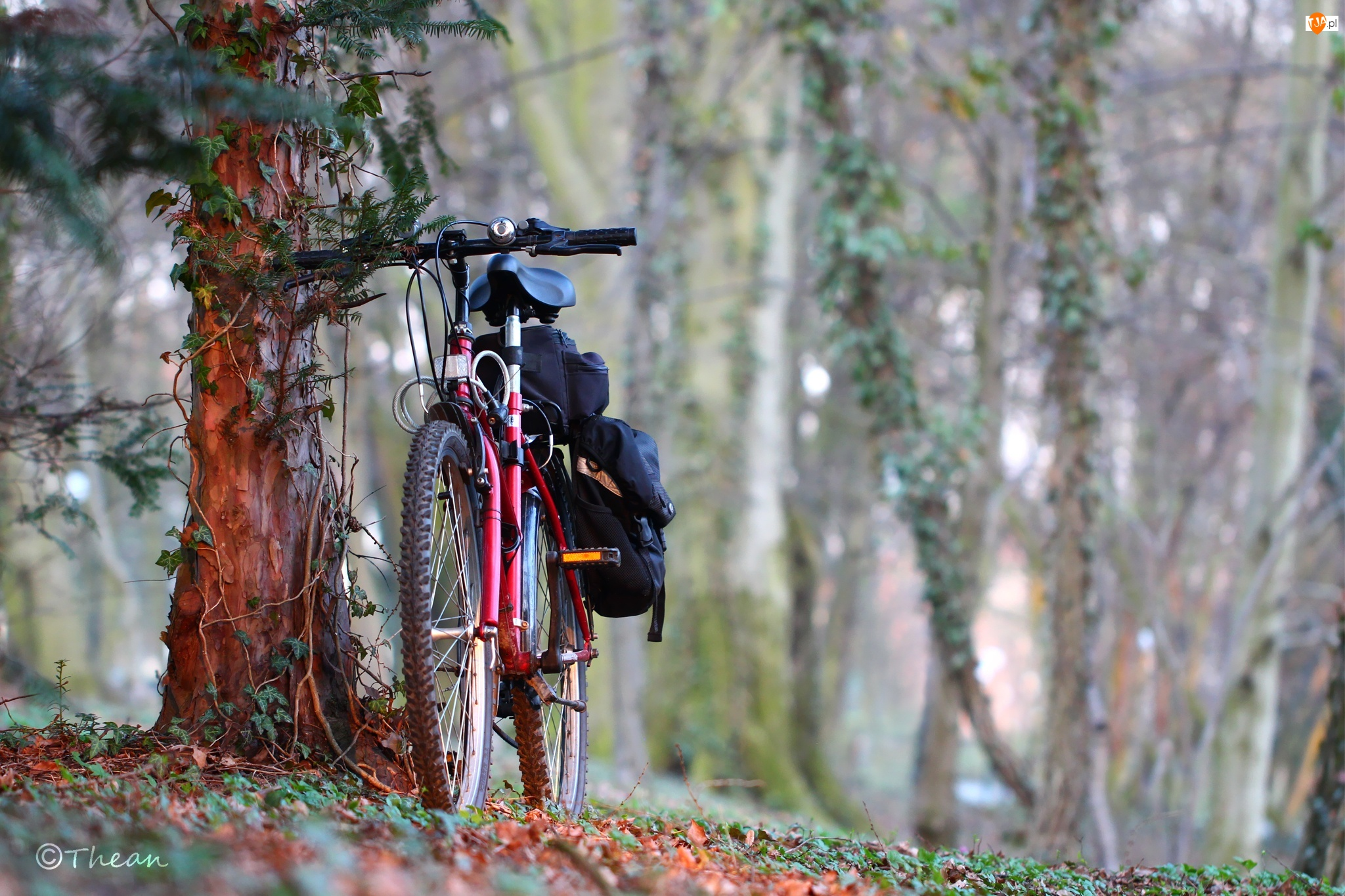 Rower, Drzewa