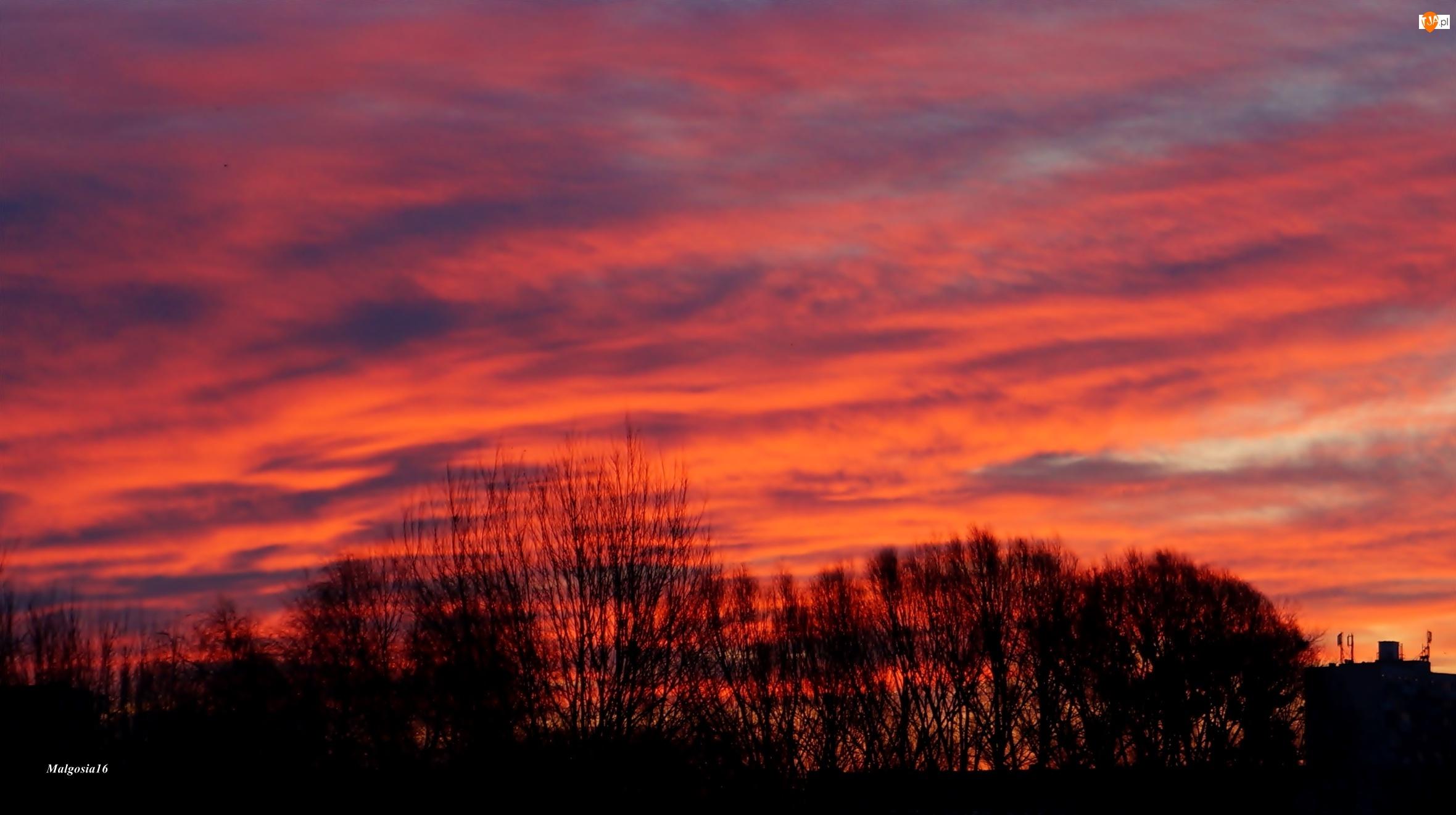 Drzewa, Czerwone, Chmury, Niebo, Wschód Słońca