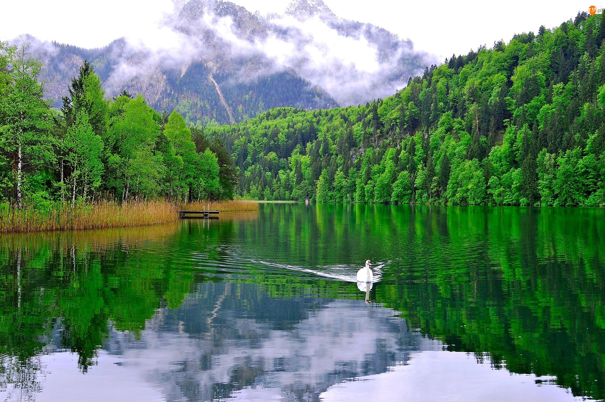 Góry, Łabędz, Lasy, Jezioro