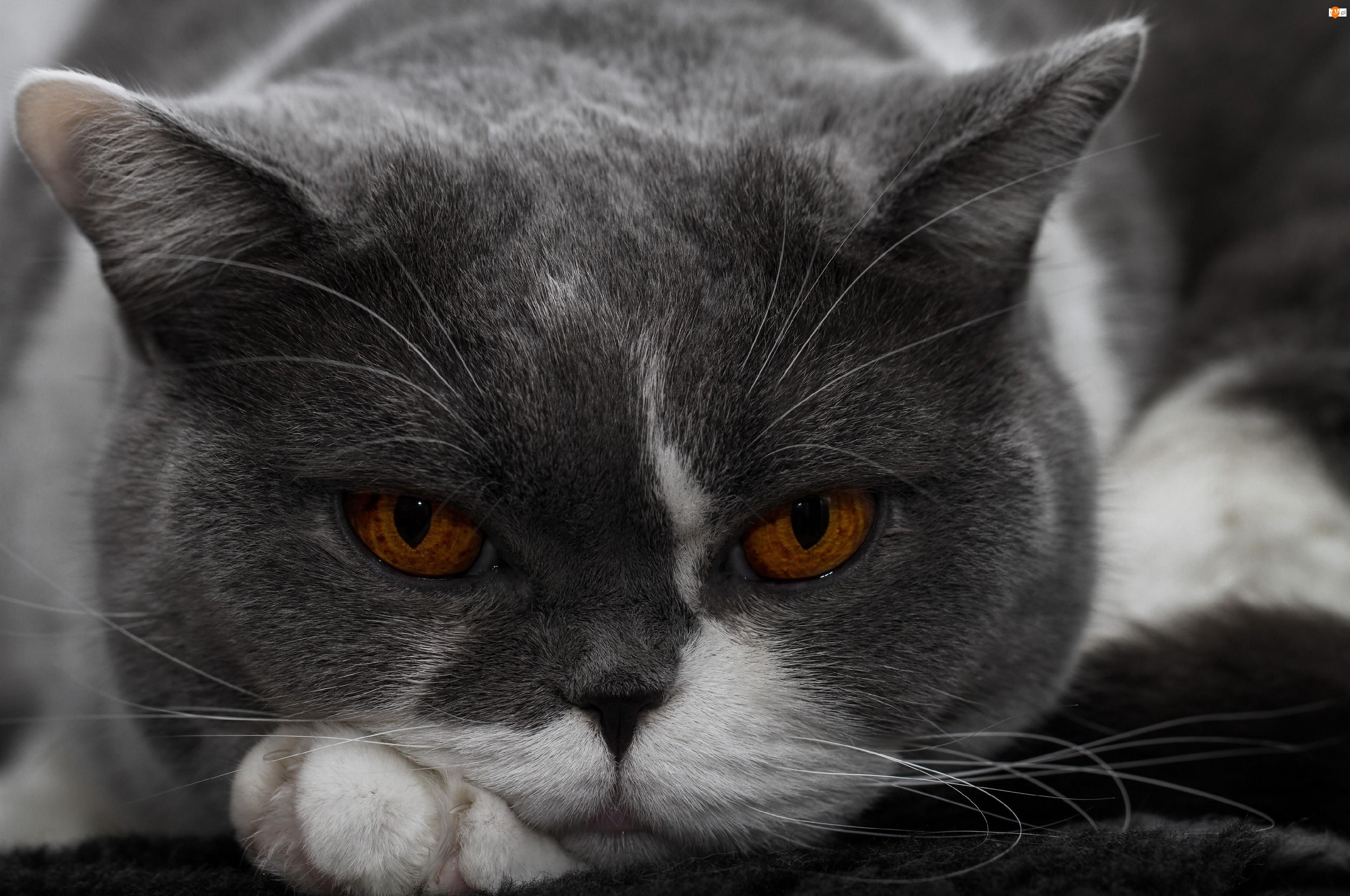 Kotek, Oczy