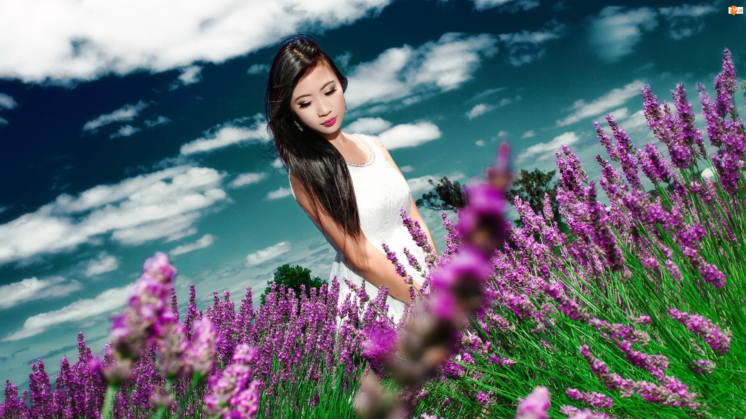 Kobieta, Lawenda wąskolistna, Kwiaty, Plantacja