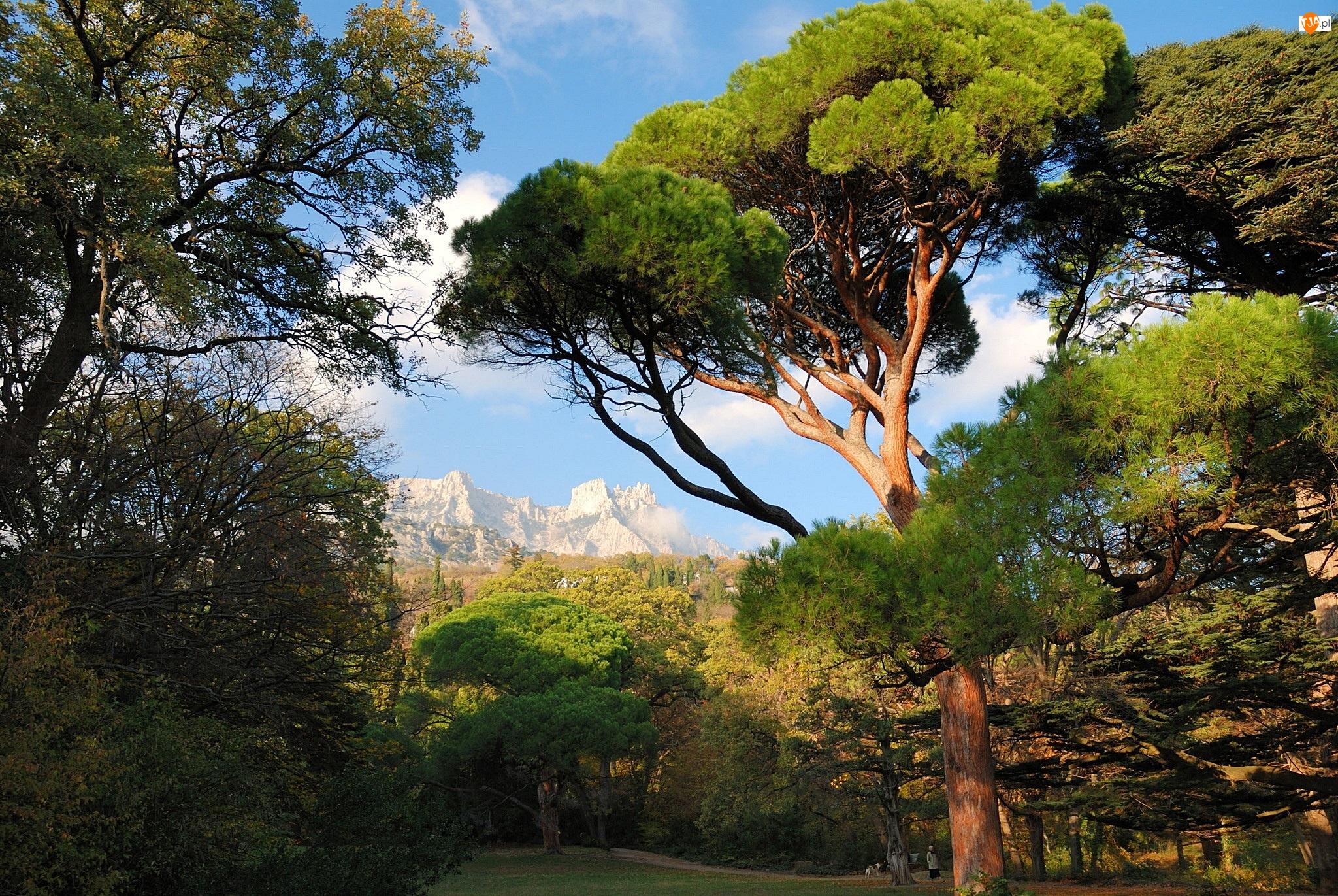 Góry, Park, Drzewa