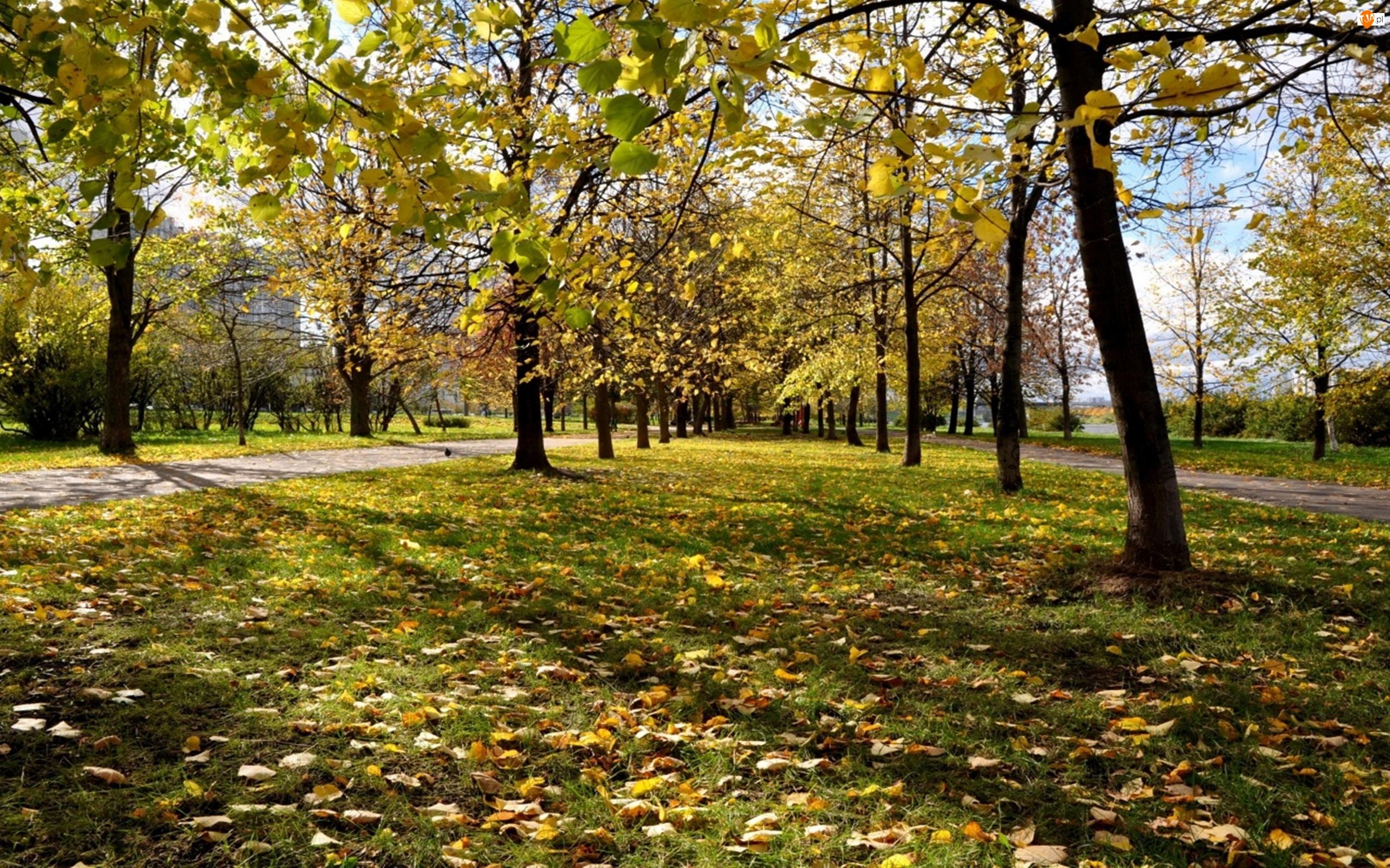 Park, Jesień, Moskwa, Rosja