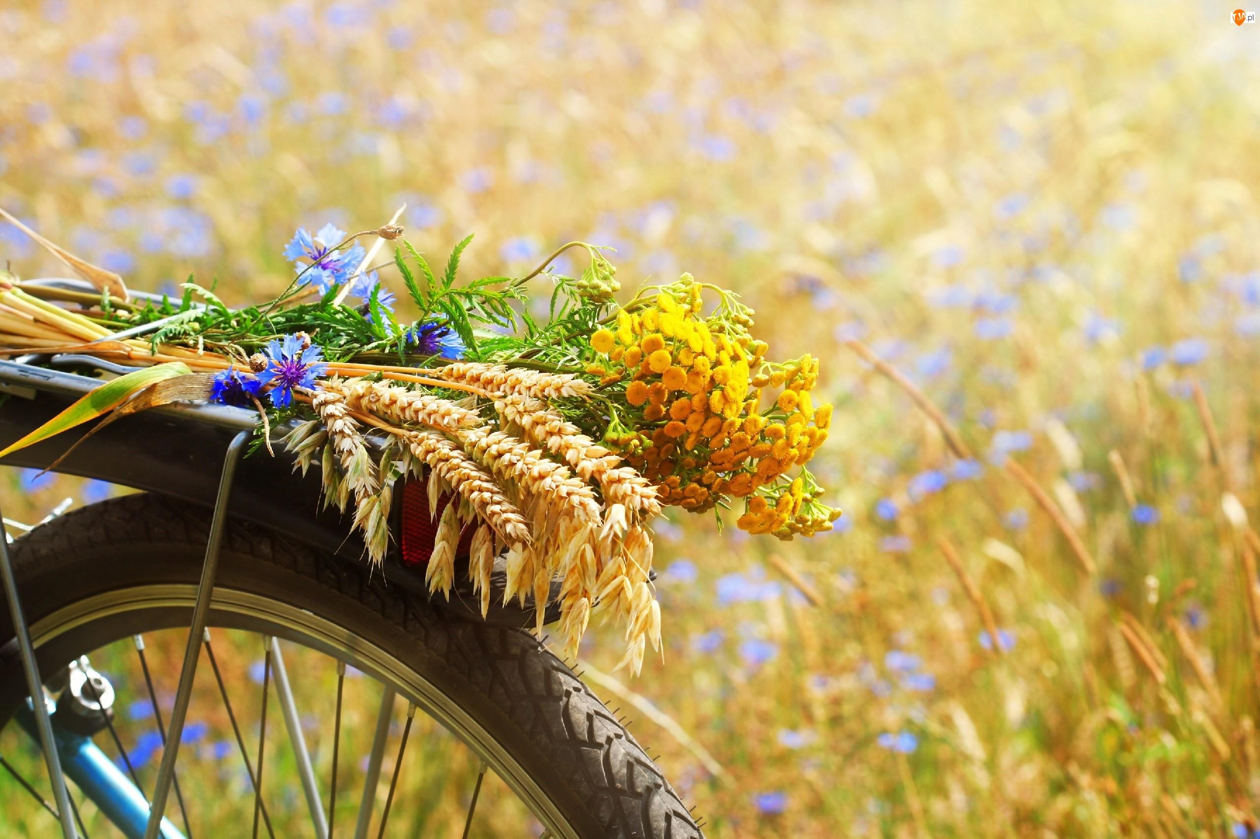 Rower, Zboże, Letnich, Wiązanka, Pole, Kwiatów, Owies