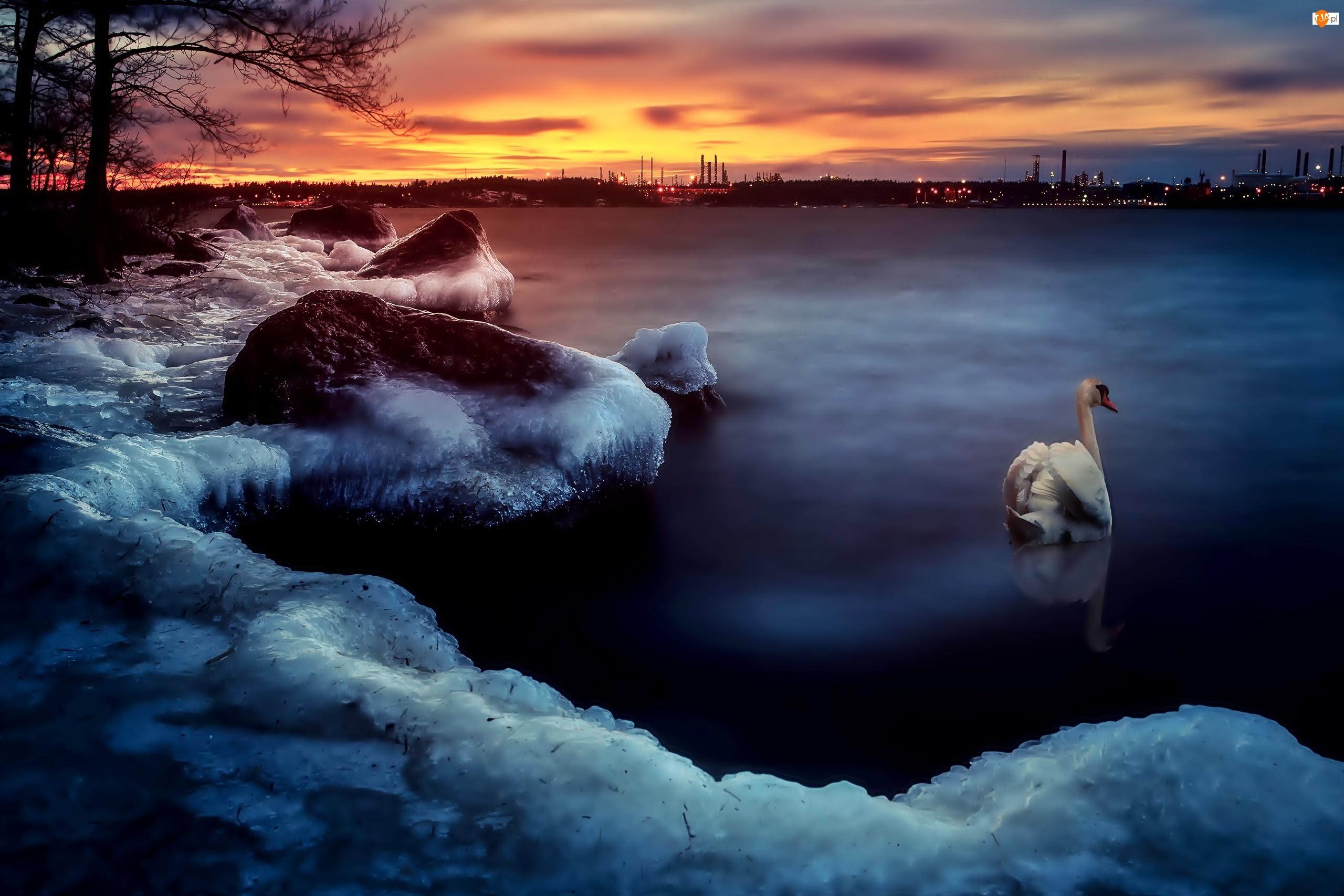 Słońca, Oblodzony, Rzeka, Brzeg, Zachód, Łabędź