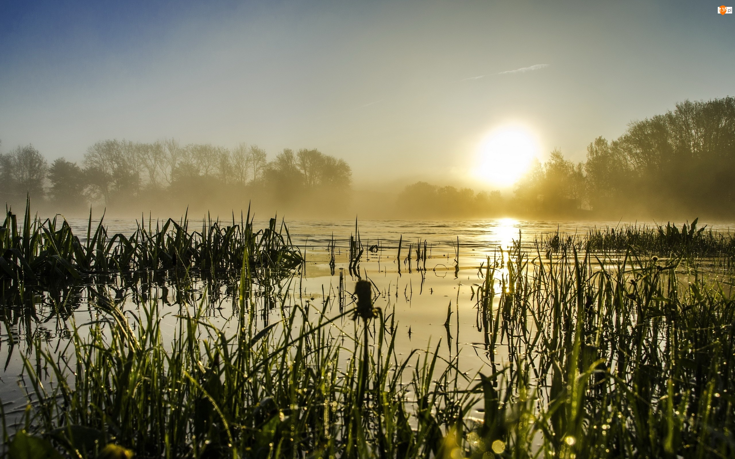 Jezioro, Drzewa, Wschód, Mgła, Słońca, Tatarak