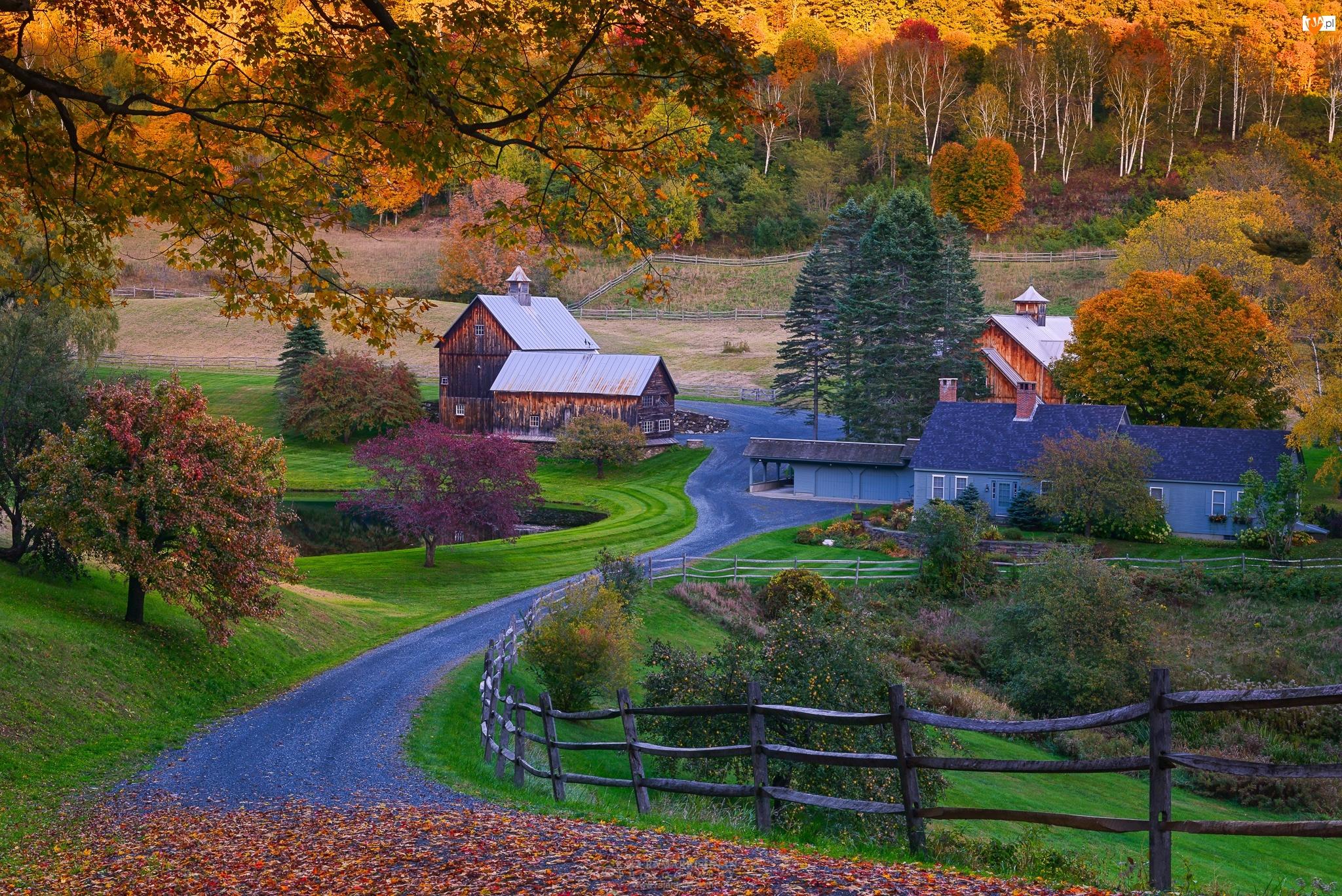Wioska, Jesień, Stany, Las, Zjednoczone, Droga