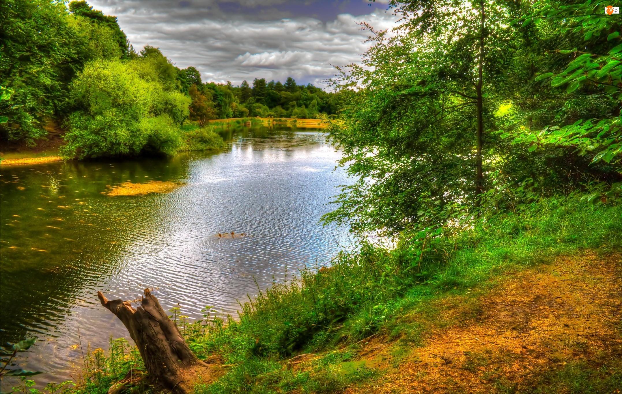 Jezioro, Anglia, Park, Nostell
