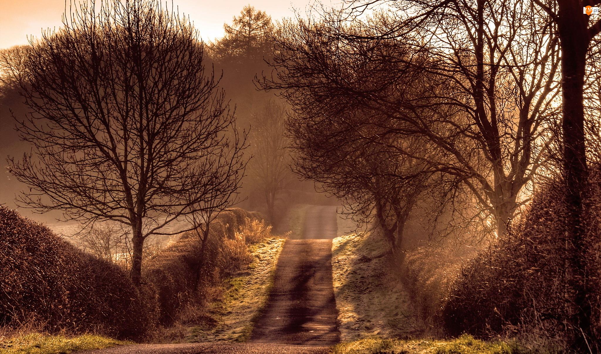 Droga, Sepia, Mgła, Drzewa