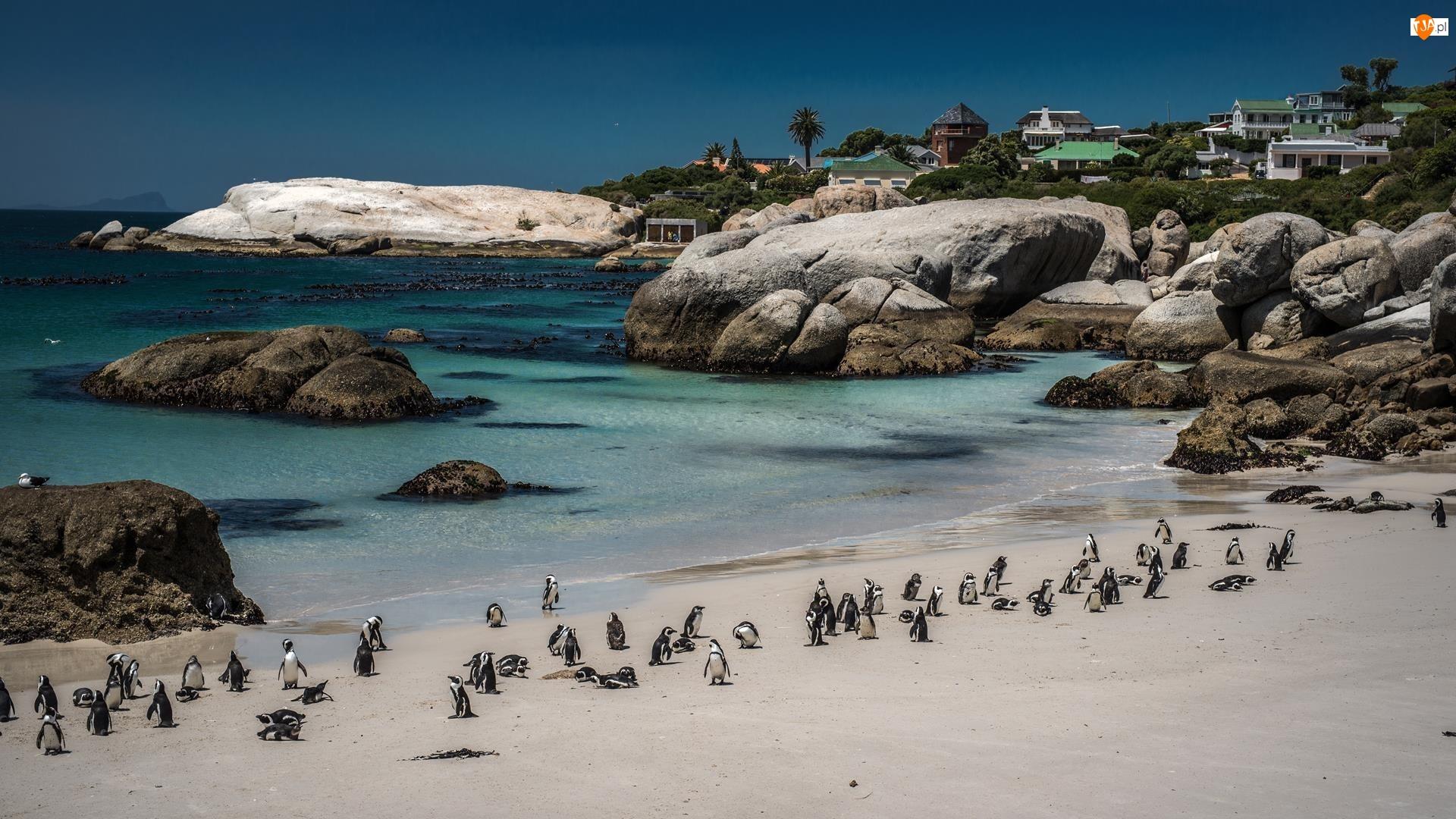 Plaża, Pingwiny