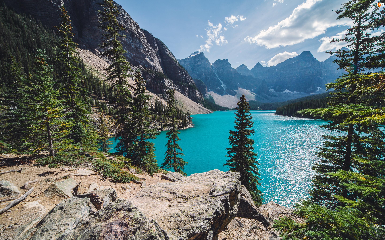 Jezioro Moraine Lake, Kanada, Góry, Park Narodowy Banff, Las