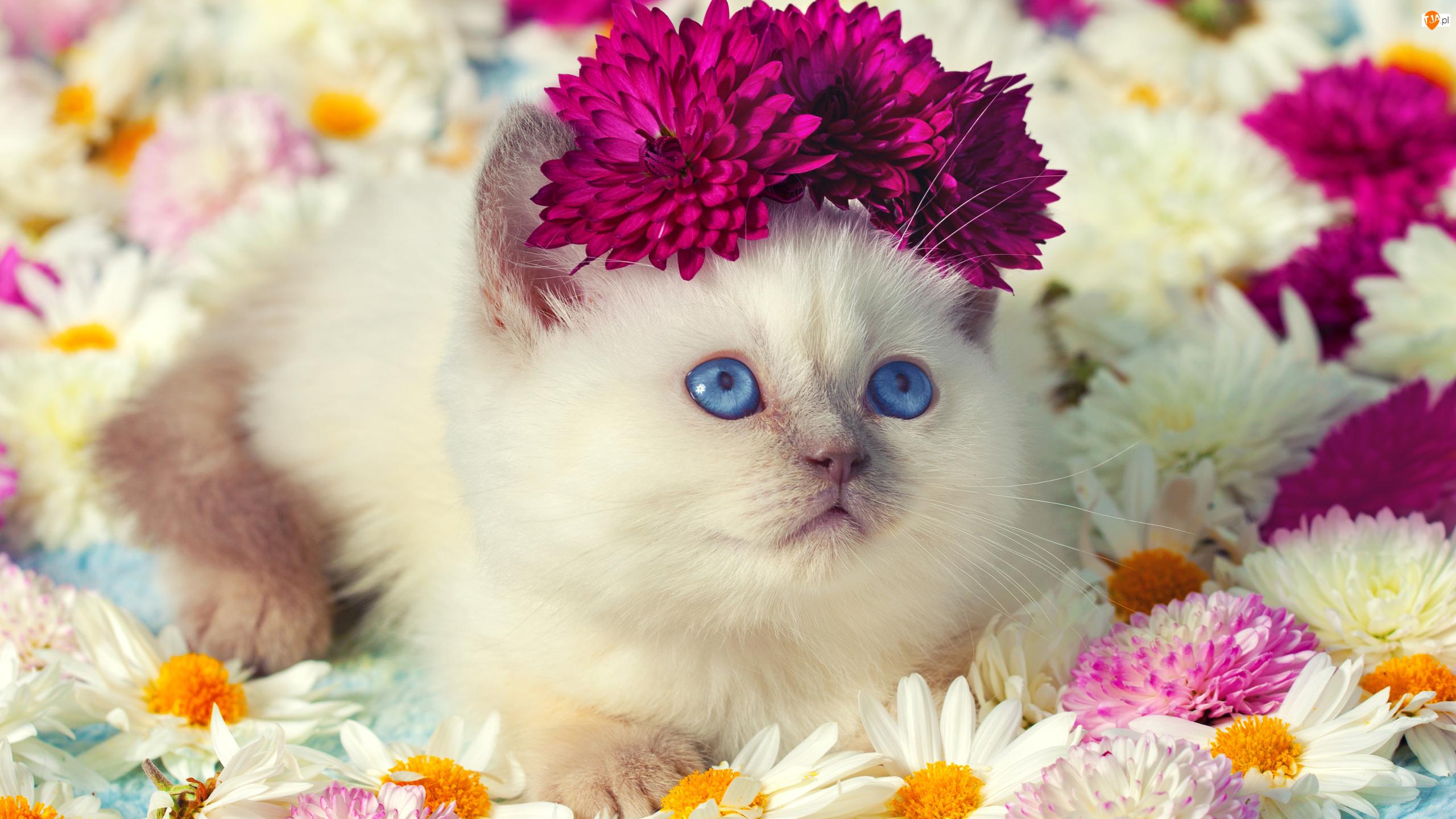 Цветочки, виде открытка с хорошим настроением