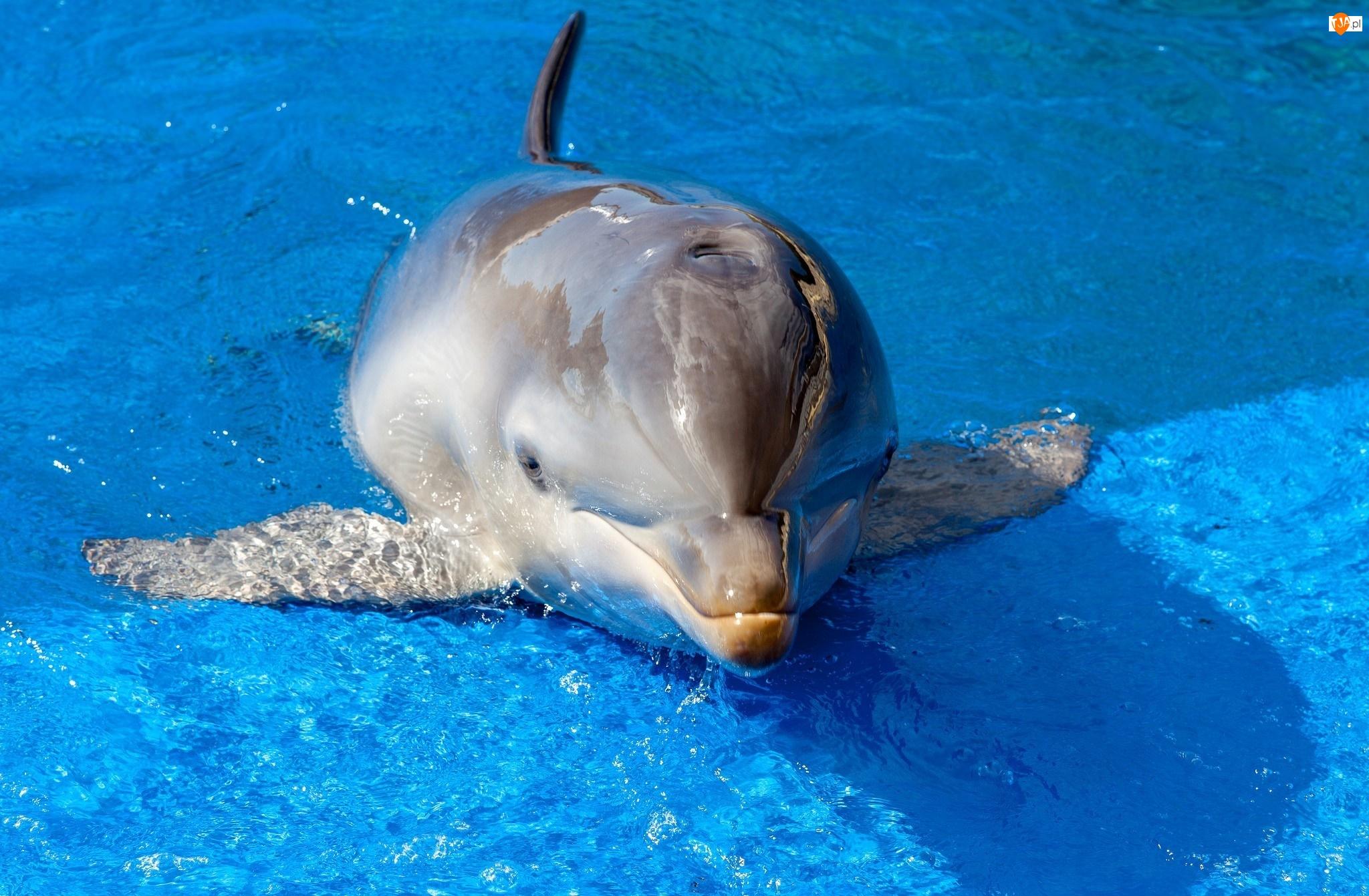 Delfinek, Basen