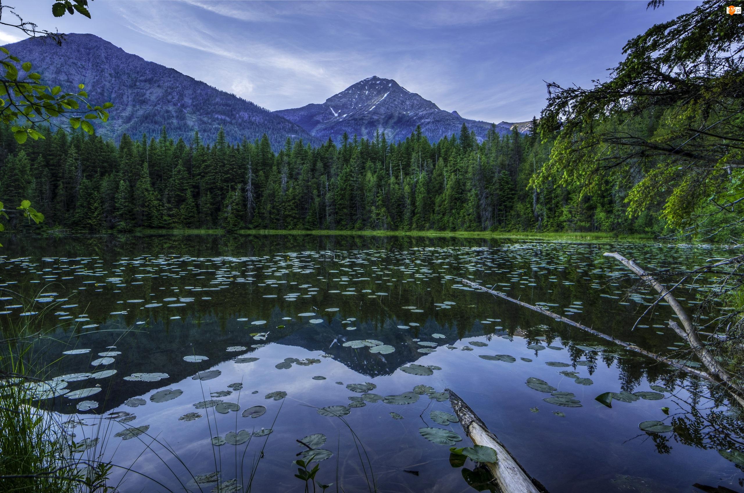 Las, Zmierzch, Góry, Drzewa, Jezioro, Liście