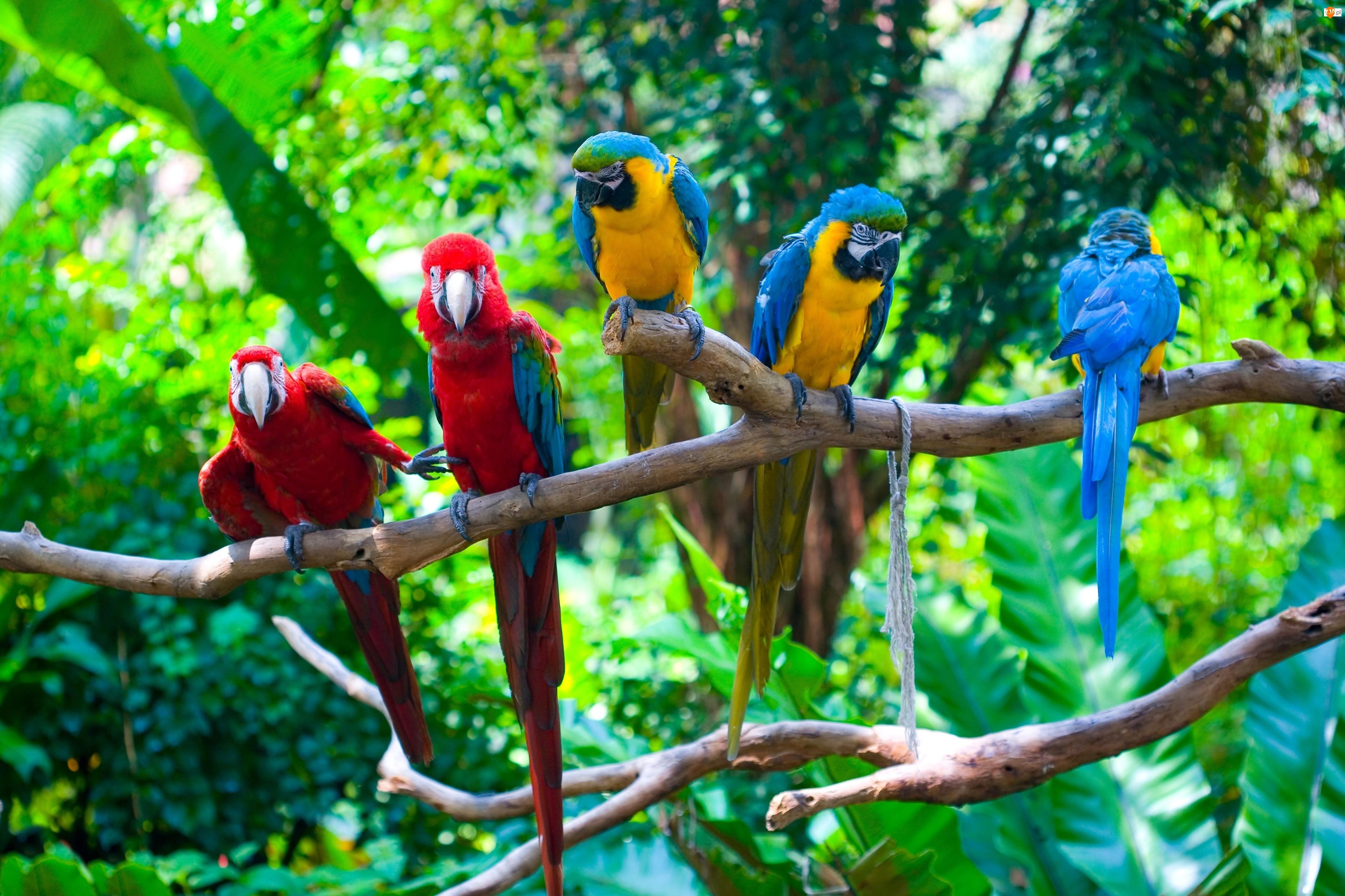 Papugi, Drzewa, Ary, Konary