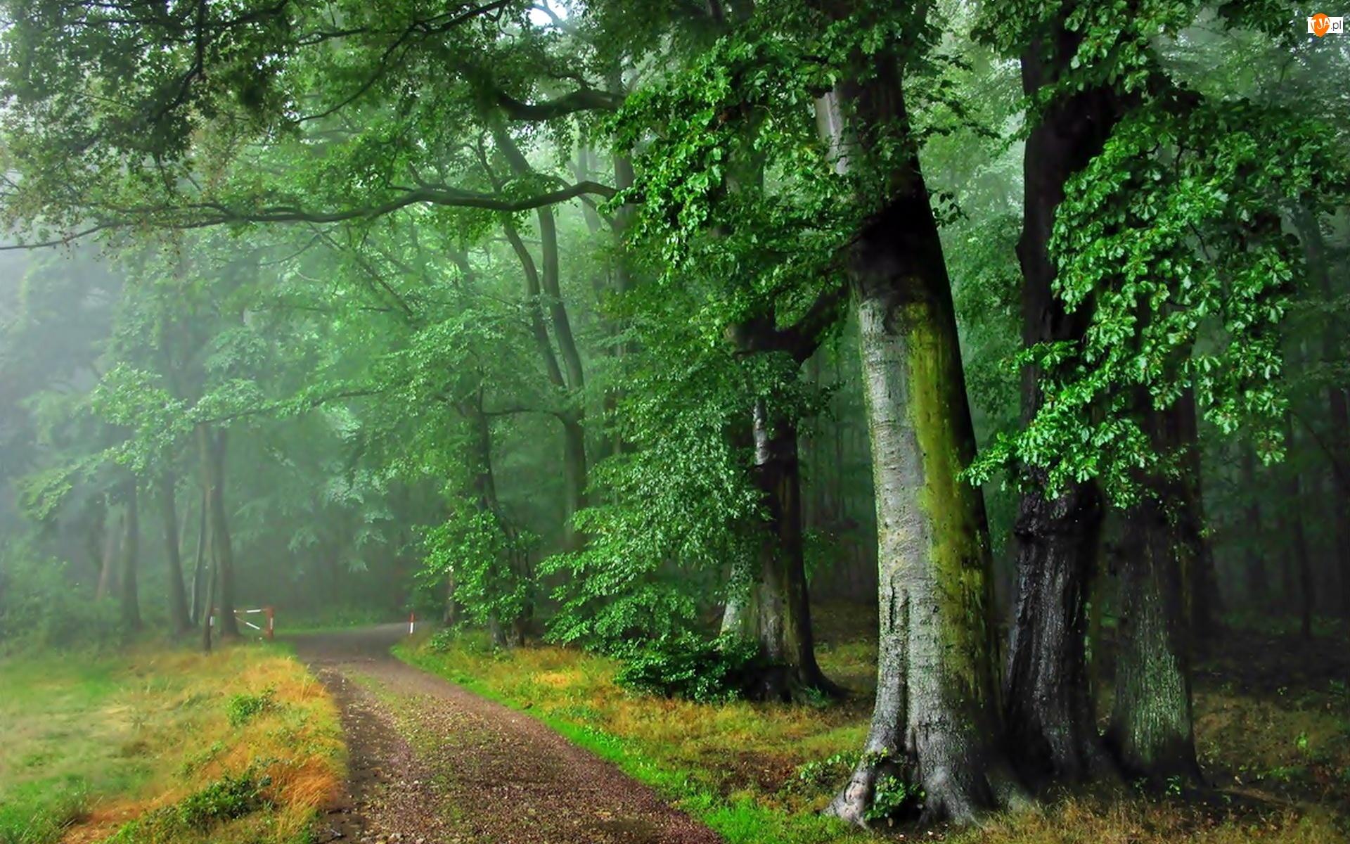 Lato, Drzewa, Droga, Las