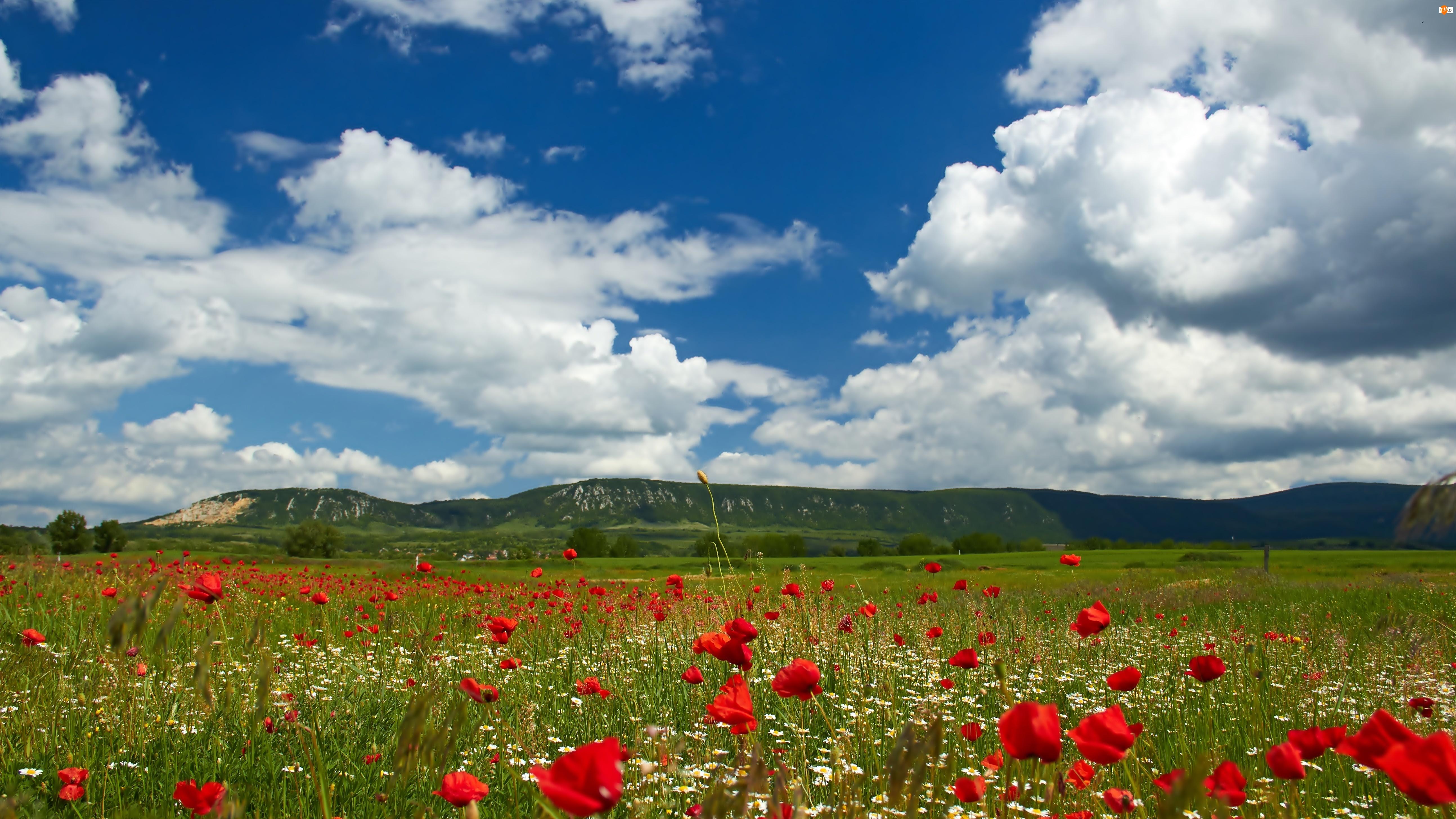Niebo, Rumianki, Trawa, Łąka, Chmury, Maki, Góry