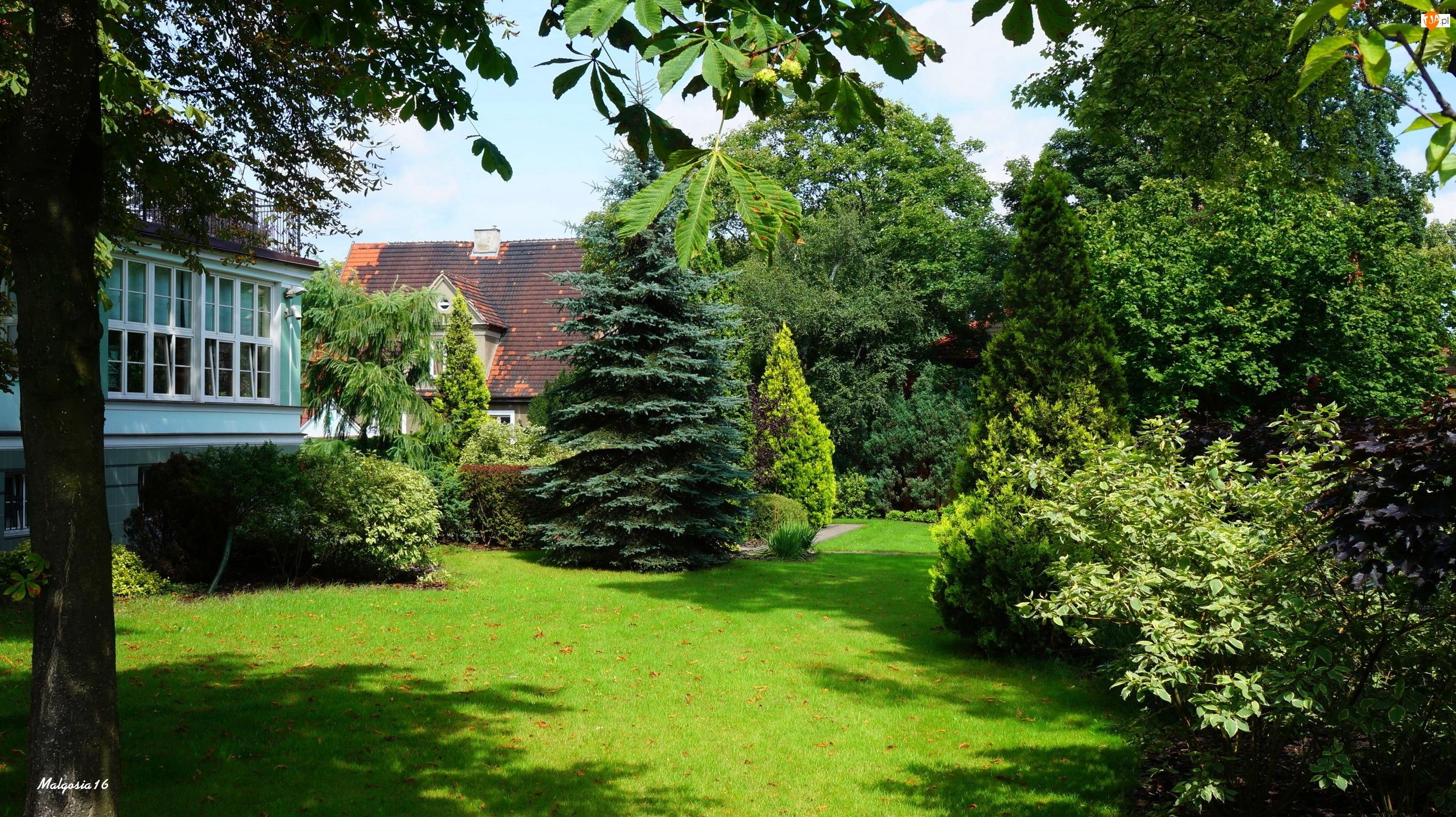 Ogród, Trawnik, Drzewa, Zieleń