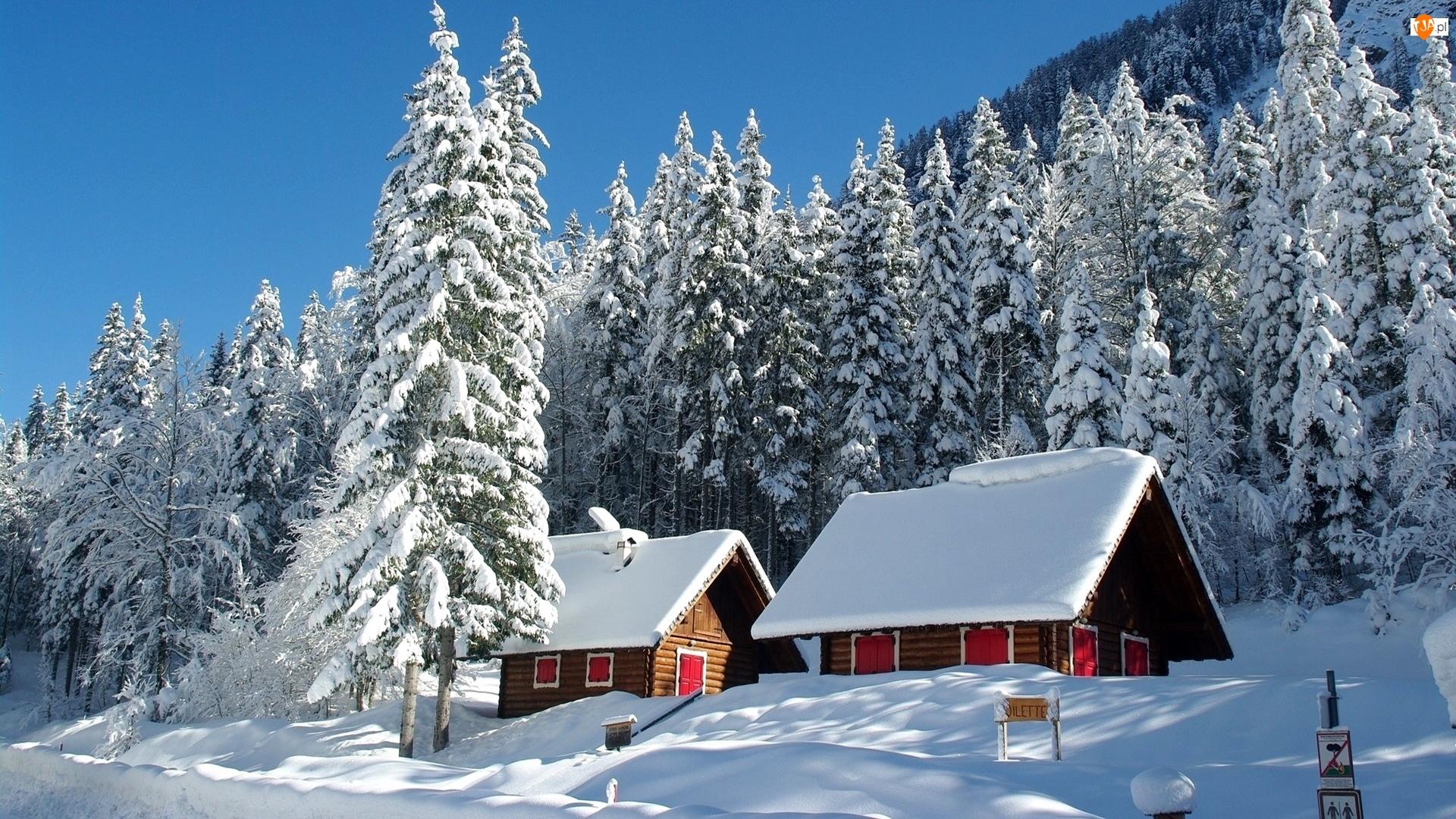 Świerki, Zima, Drzewa, Ośnieżone, Domy