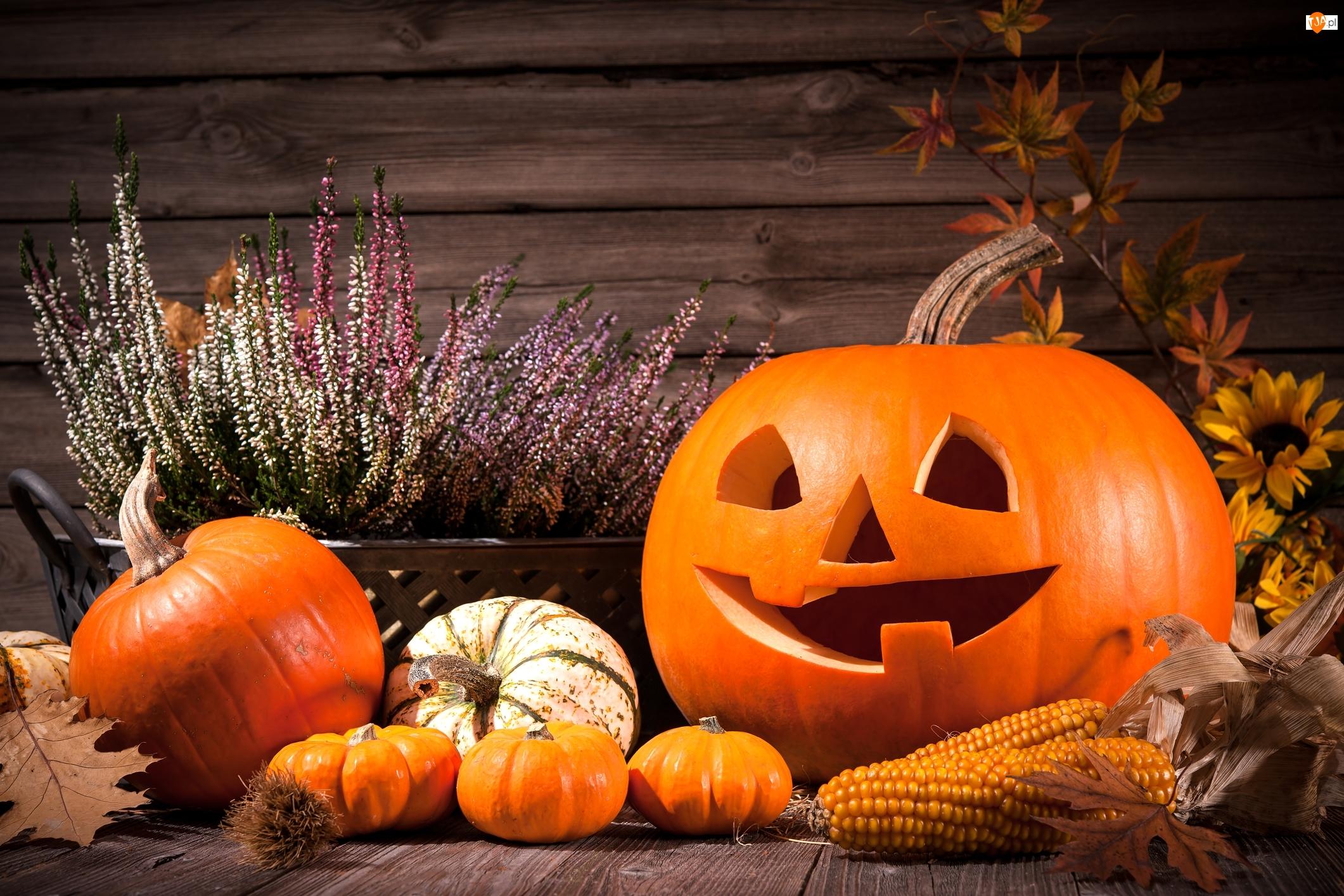 Dekoracja, Wrzos, Halloween, Dynie