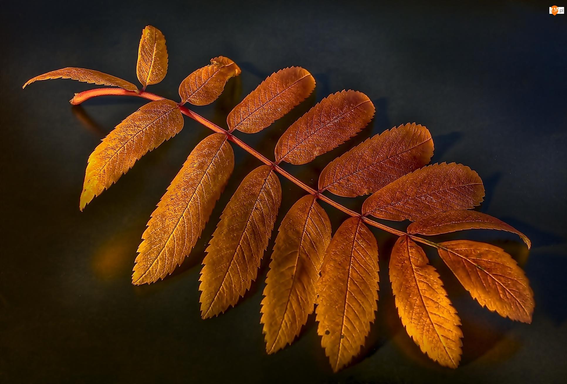 Liść, Jesienny