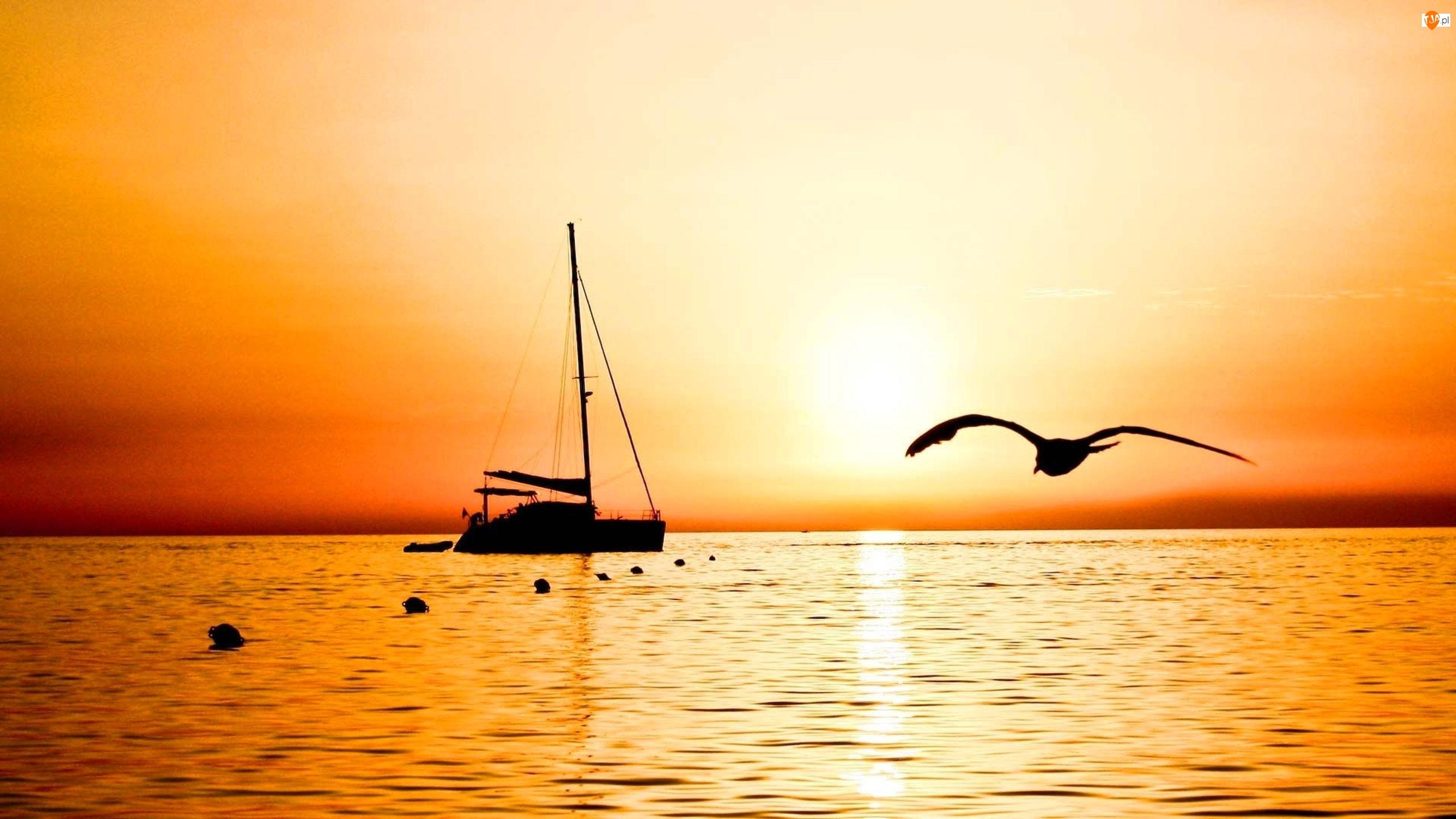Morze, Ptak, Jacht, Zachód Słońca