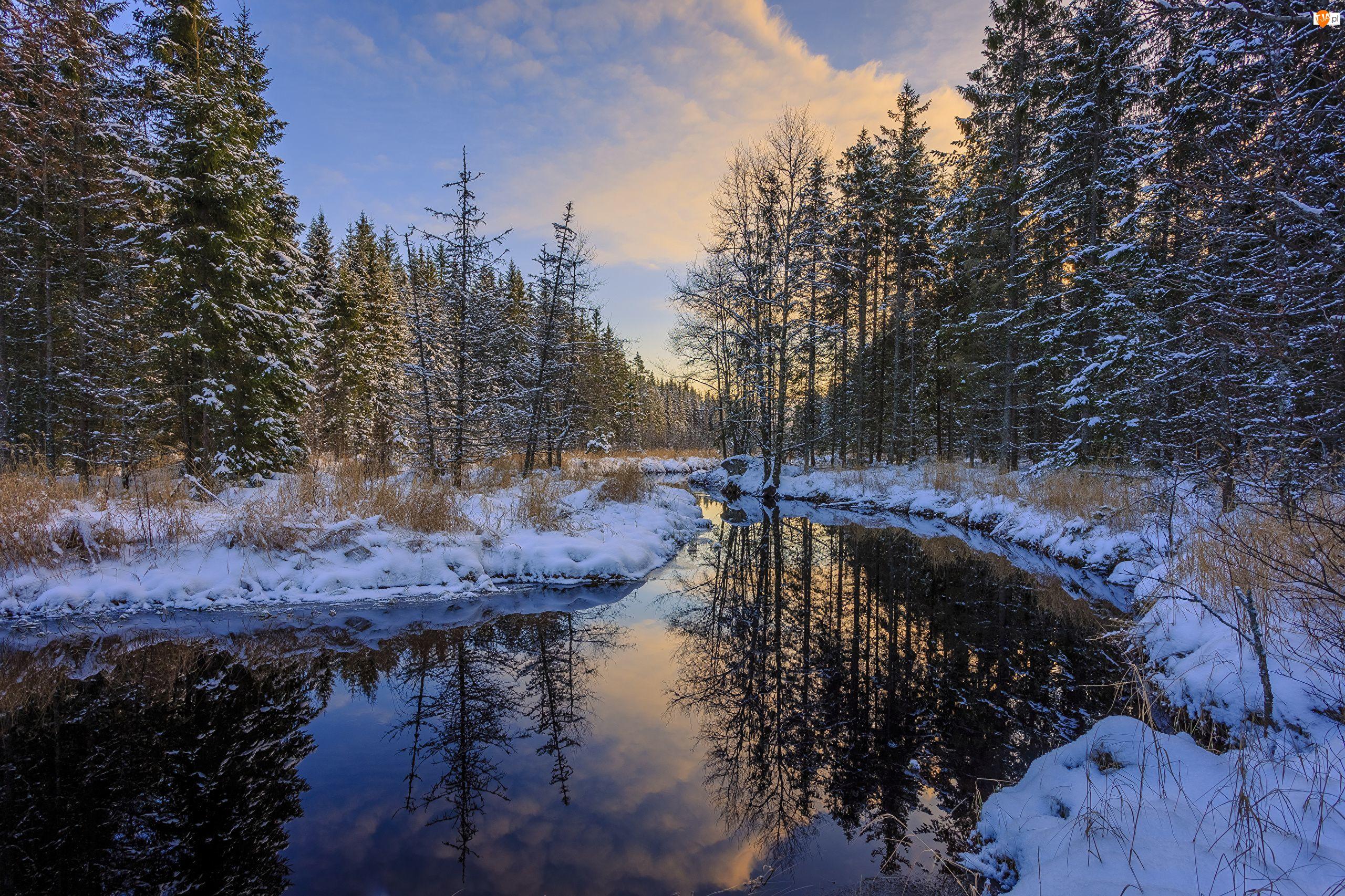 Zima, Drzewa, Rzeka, Las