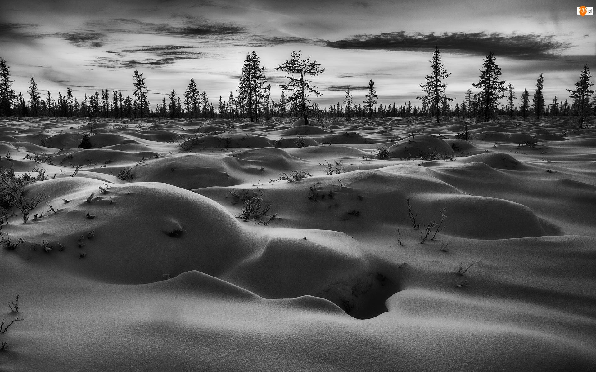 Czarno-białe, Zima, Zaspy, Pole, Drzewa