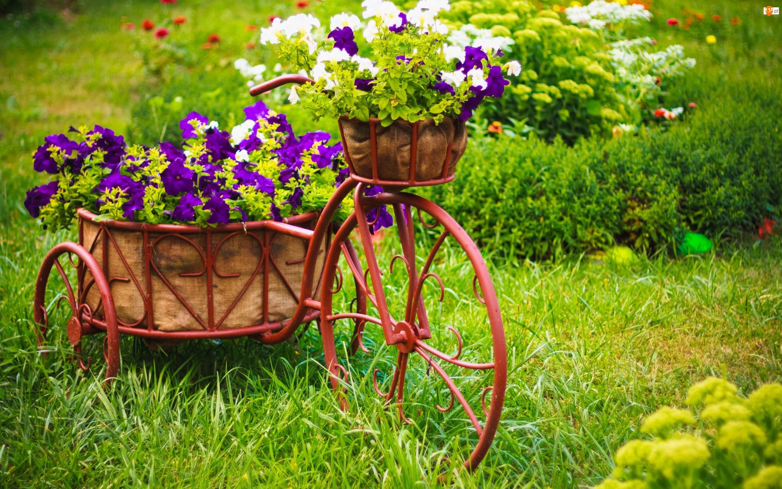 Ogród, Rower, Donice, Kwietnik, Kwiaty