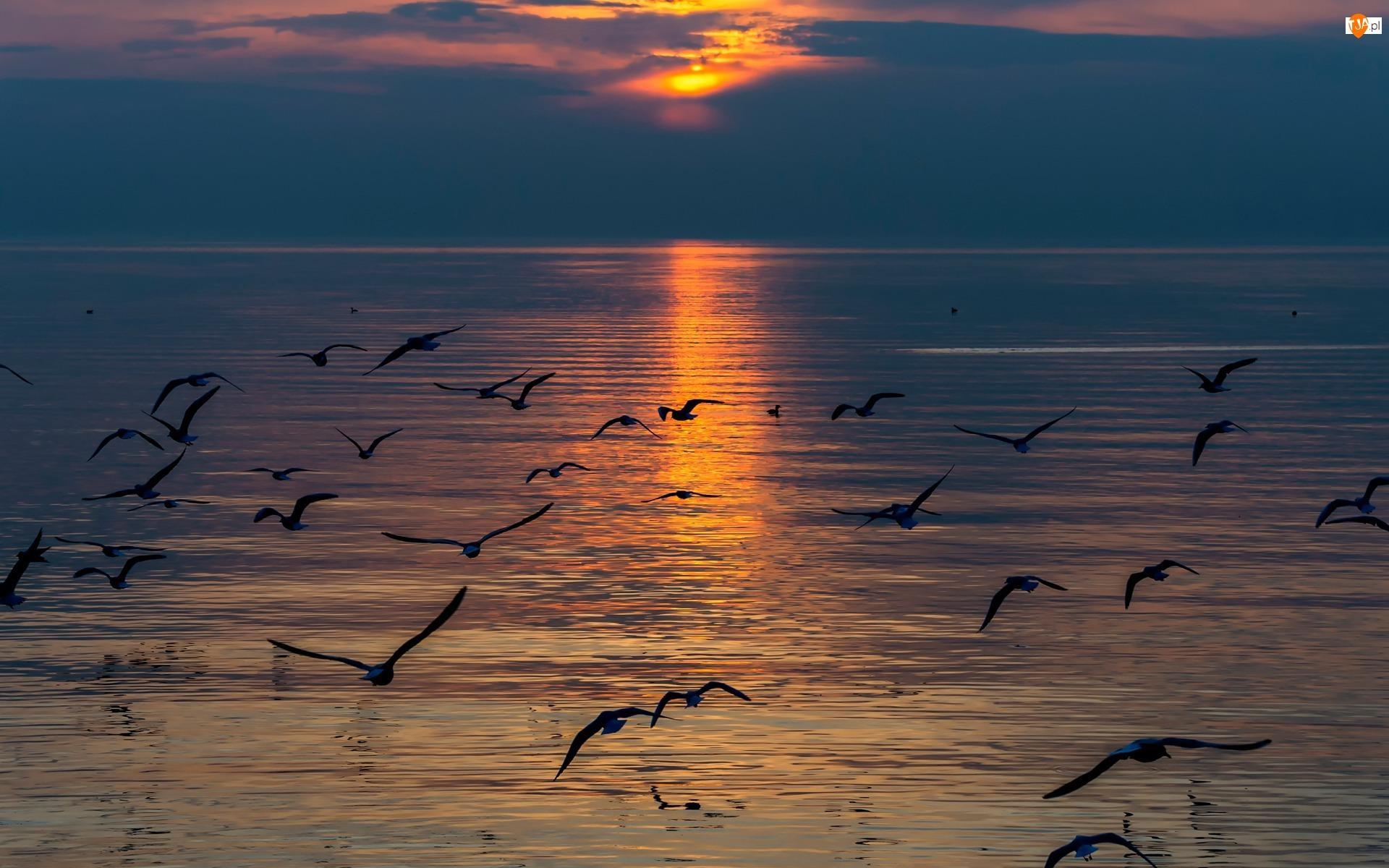 Morze, Zachód Słońca, Ptaki, Mewy