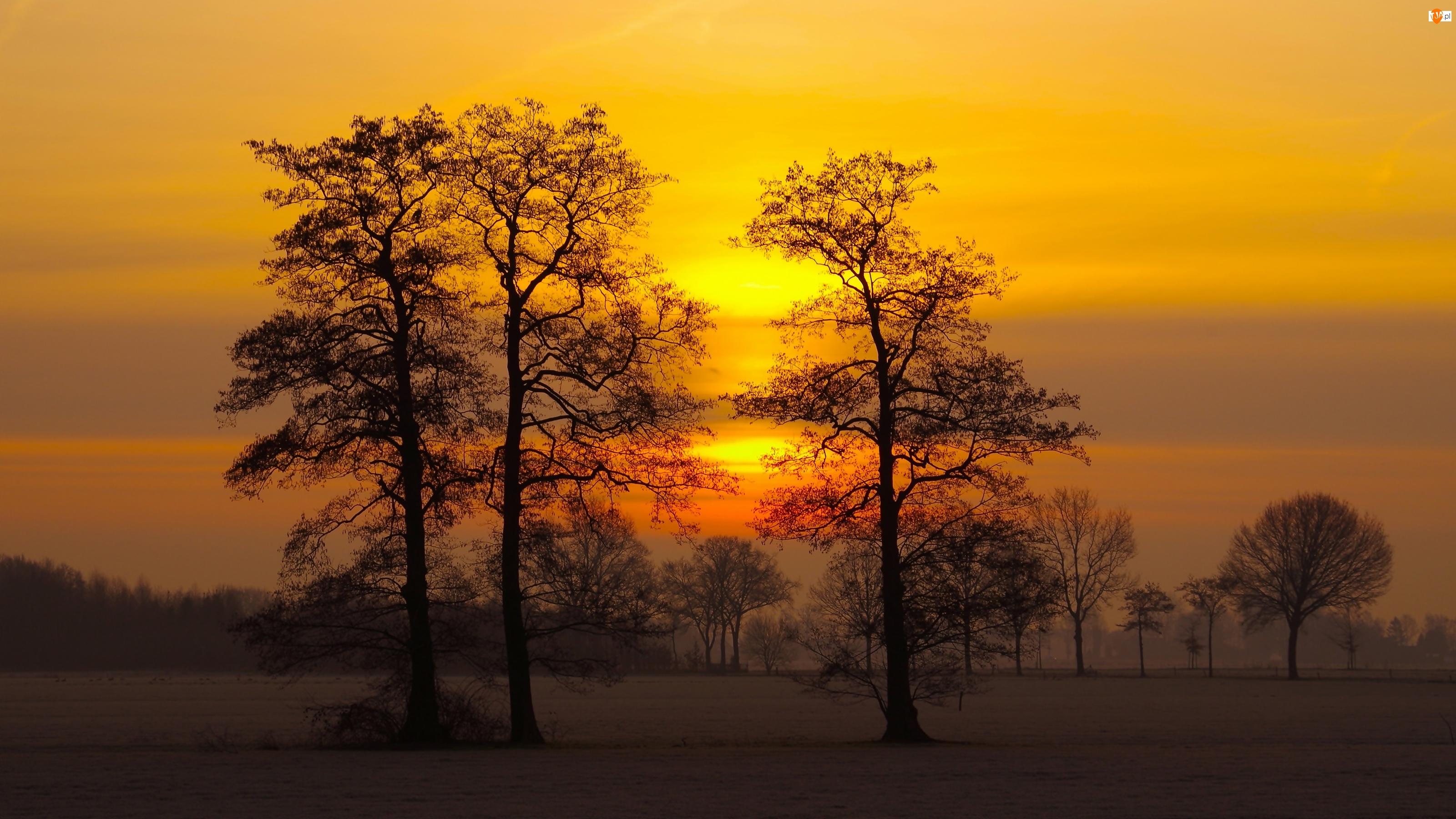Zachód słońca, Drzewa, Mgła