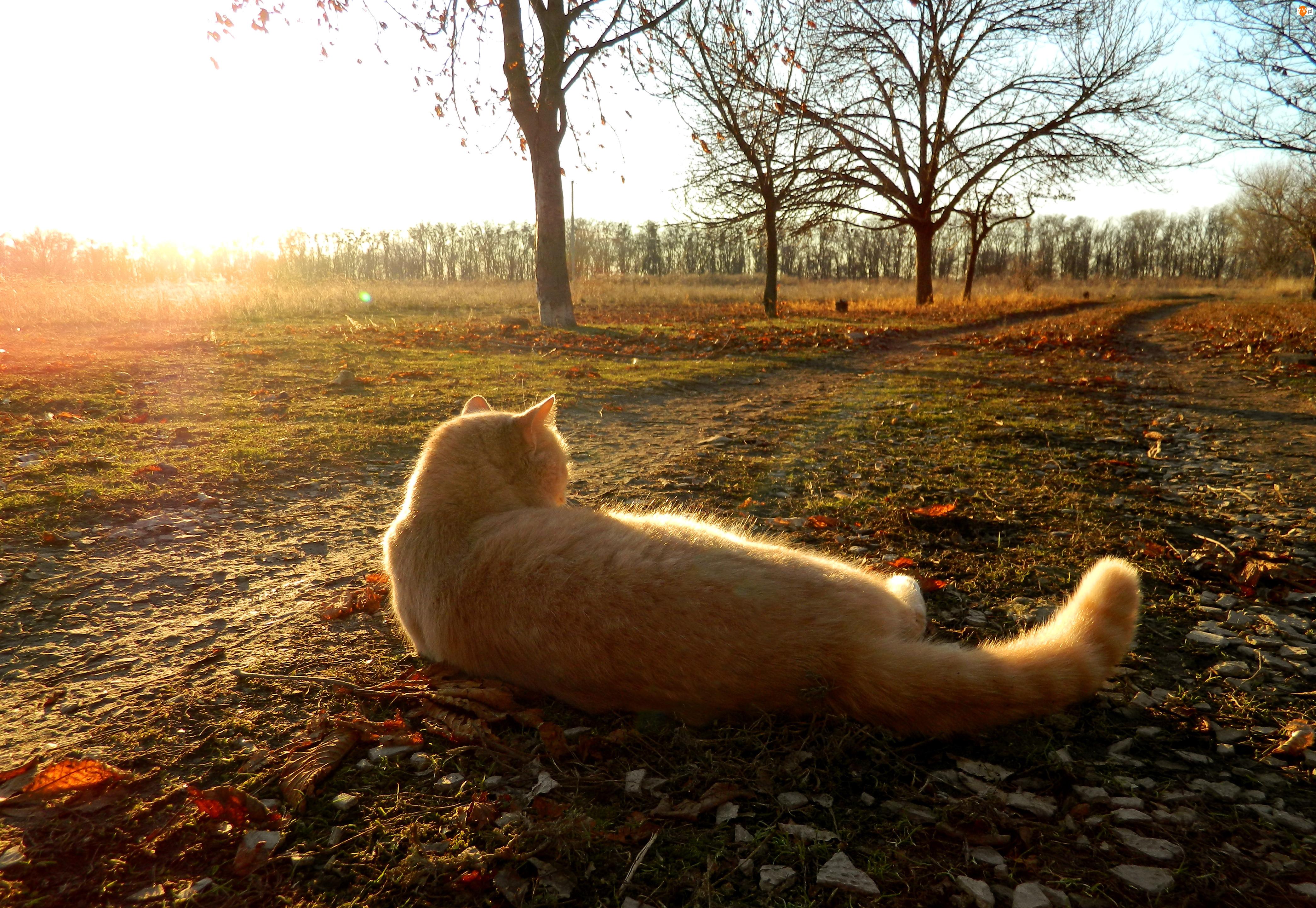 Jesień, Leżący, Kot