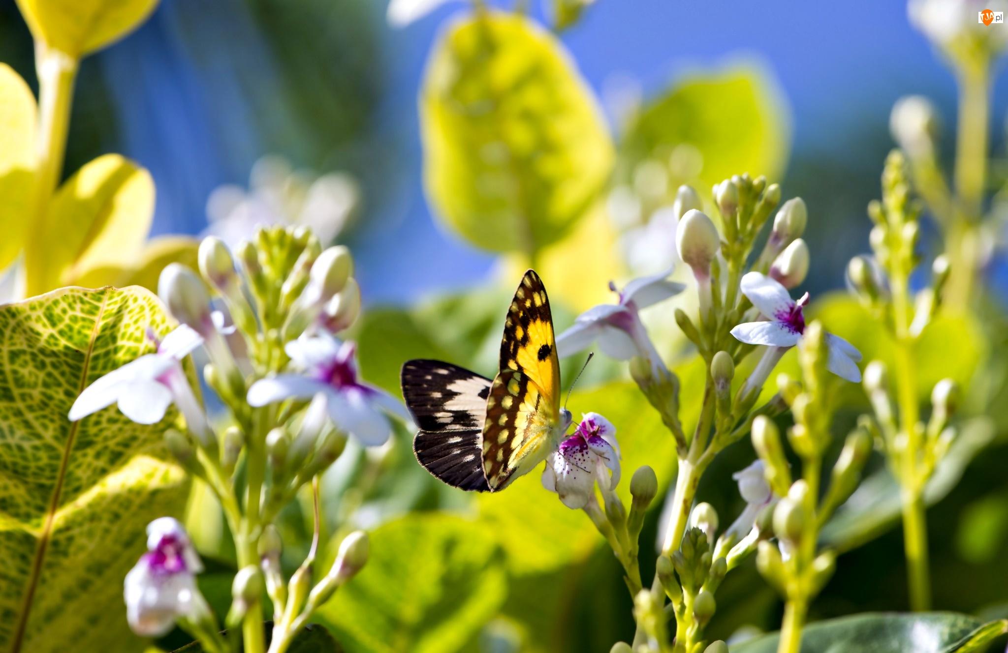 Motyl, Światło, Kwiaty, Liście