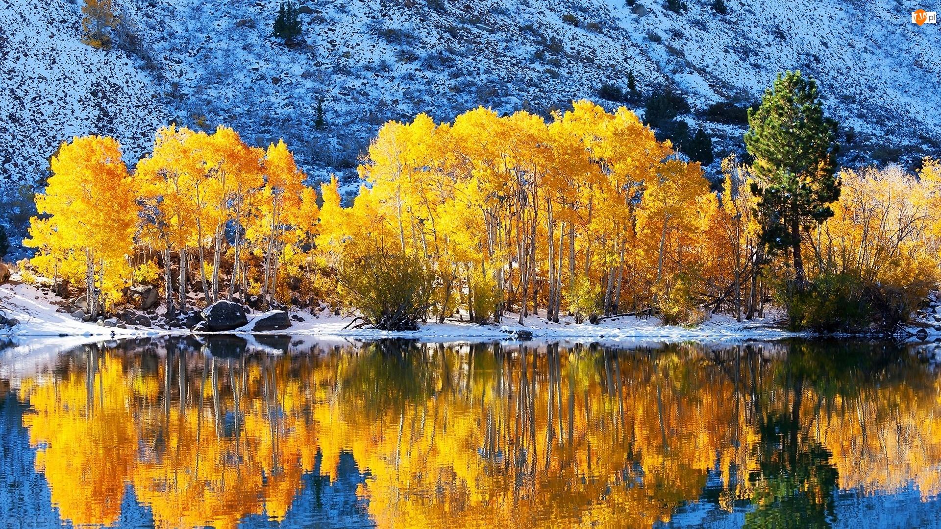 Zima, Odbicie, Jezioro, Drzewa
