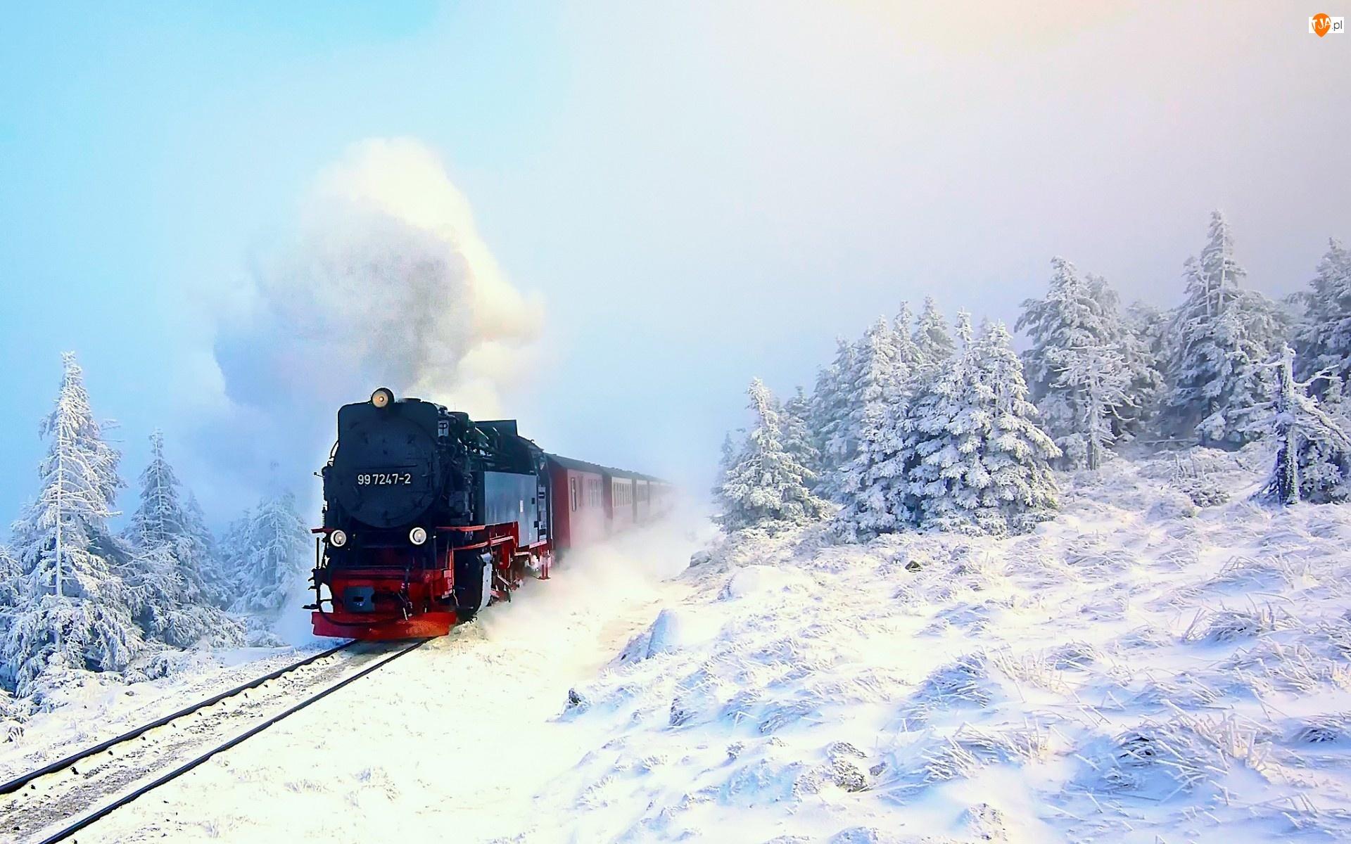 Pociąg, Zima, Lasy, Drzewa